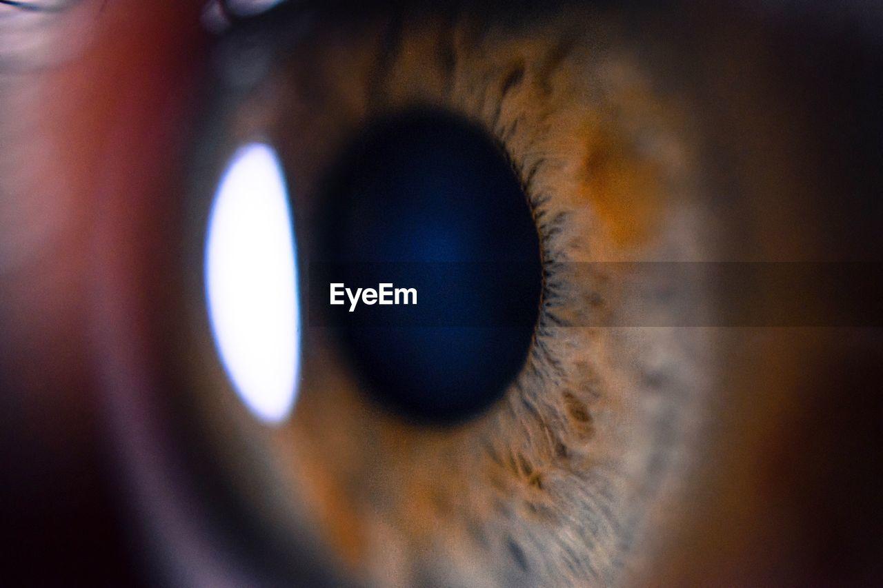 eyesight, close-up, human eye, sensory perception, full frame, outdoors, eyelash, backgrounds, eyeball, real people, day, one person, people