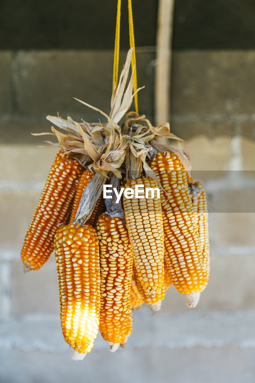corn, food and drink, vegetable, wellbeing, close-up, food, hanging, focus on foreground, corn on the cob, no people, healthy eating, sweetcorn, freshness, day, yellow, tied up, still life, outdoors, raw food, nature