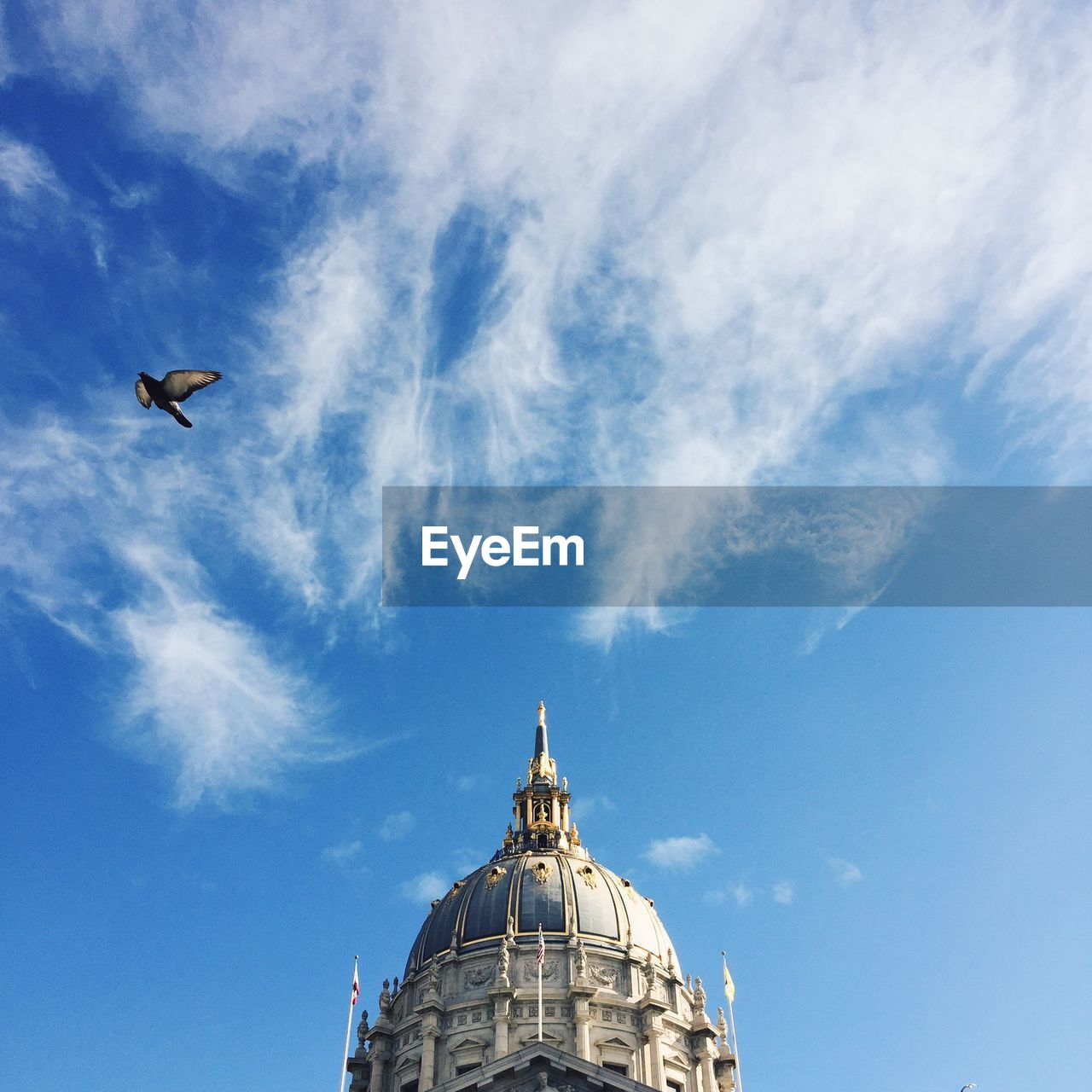 Low Angle View Of Pigeon And San Francisco City Hall Against Sky