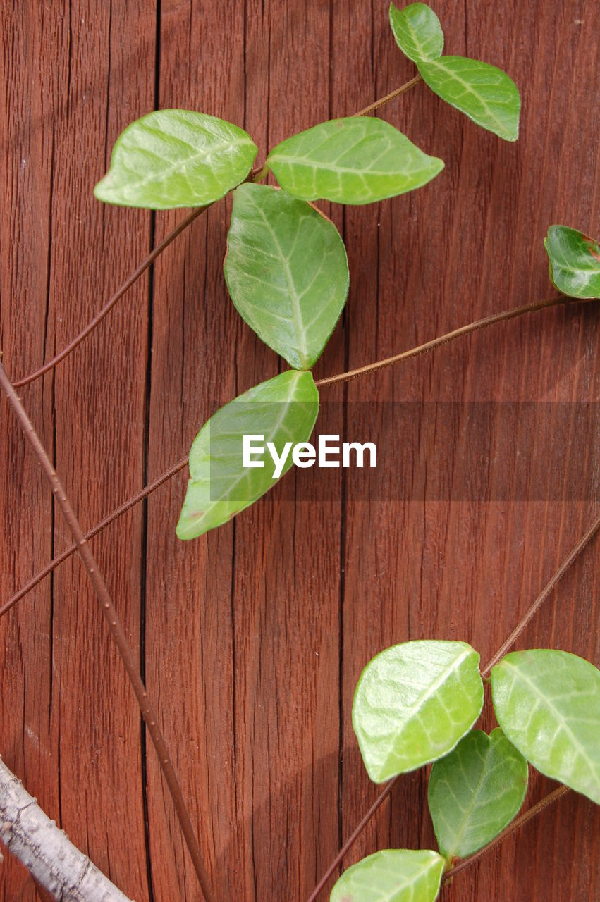 leaf, green color, wood - material, plant, close-up, growth, freshness, food and drink, high angle view, no people, vegetable, directly above, basil, herb, healthy eating, nature, lettuce, fragility, food, wood grain, mint leaf - culinary, indoors, day