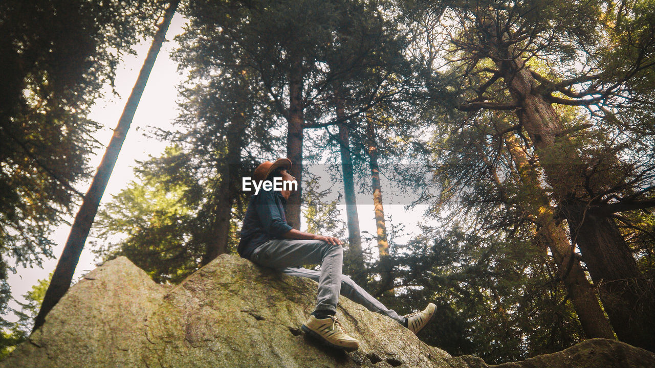 Low Angle View Of Man Sitting On Rock By Trees In Forest