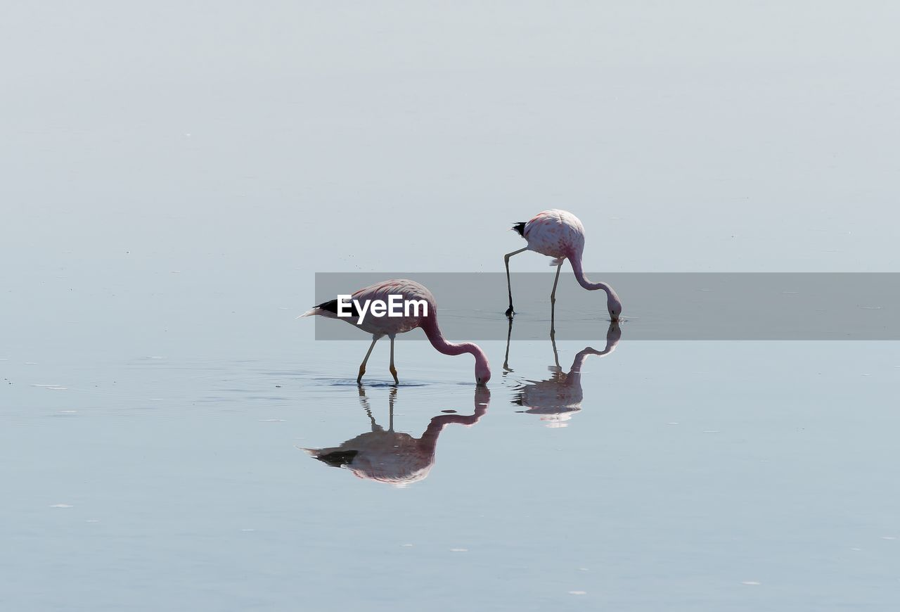 animal themes, animal, animal wildlife, animals in the wild, vertebrate, bird, water, reflection, waterfront, lake, nature, no people, two animals, group of animals, day, wading, beauty in nature, perching, outdoors