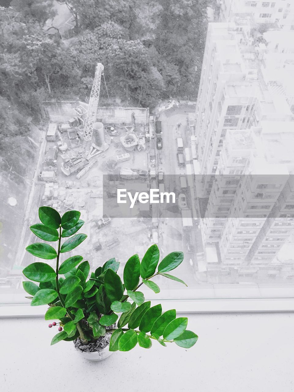 plant, leaf, plant part, nature, no people, green color, architecture, growth, window, day, built structure, indoors, close-up, beauty in nature, potted plant, glass - material, high angle view, white color, houseplant