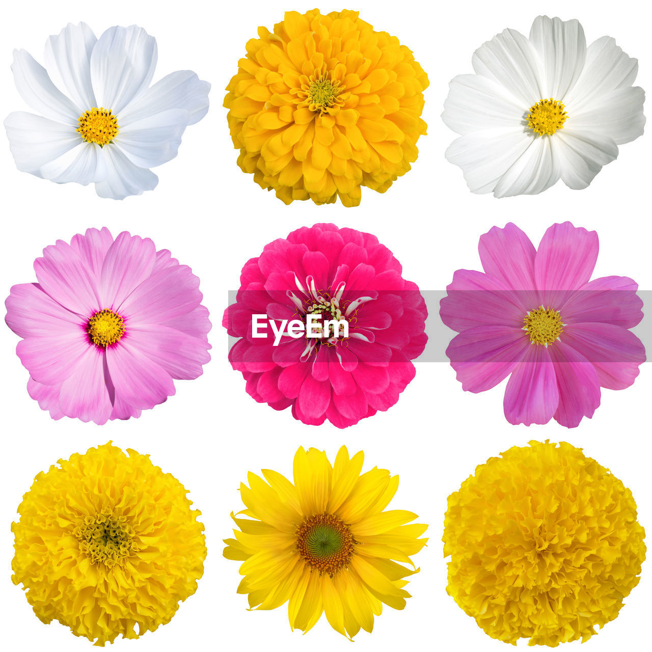 flowering plant, flower, freshness, fragility, vulnerability, flower head, beauty in nature, inflorescence, petal, plant, yellow, close-up, pink color, no people, studio shot, white background, nature, growth, multi colored, arrangement, flower arrangement
