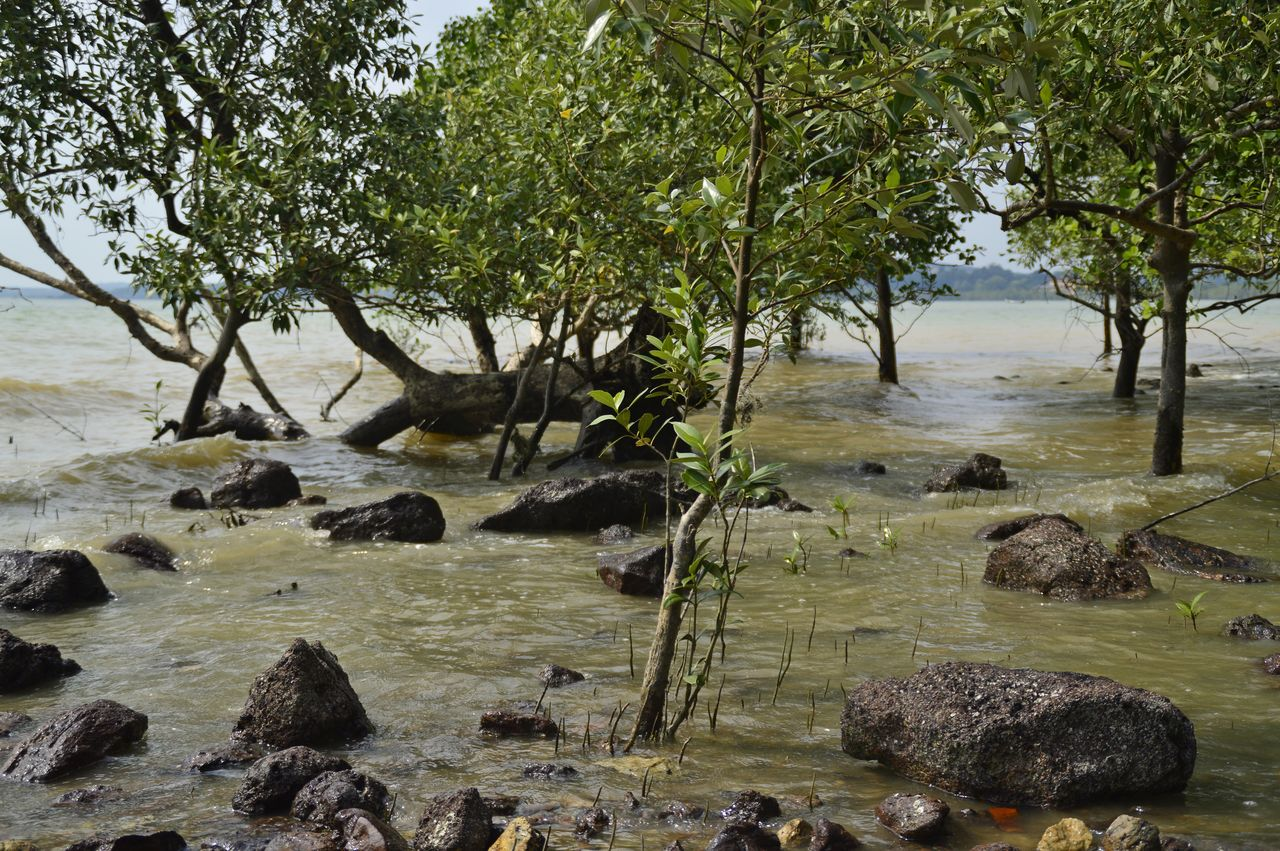 tree, rock - object, nature, no people, tranquil scene, tranquility, outdoors, beauty in nature, water, scenics, day, branch, landscape, sky
