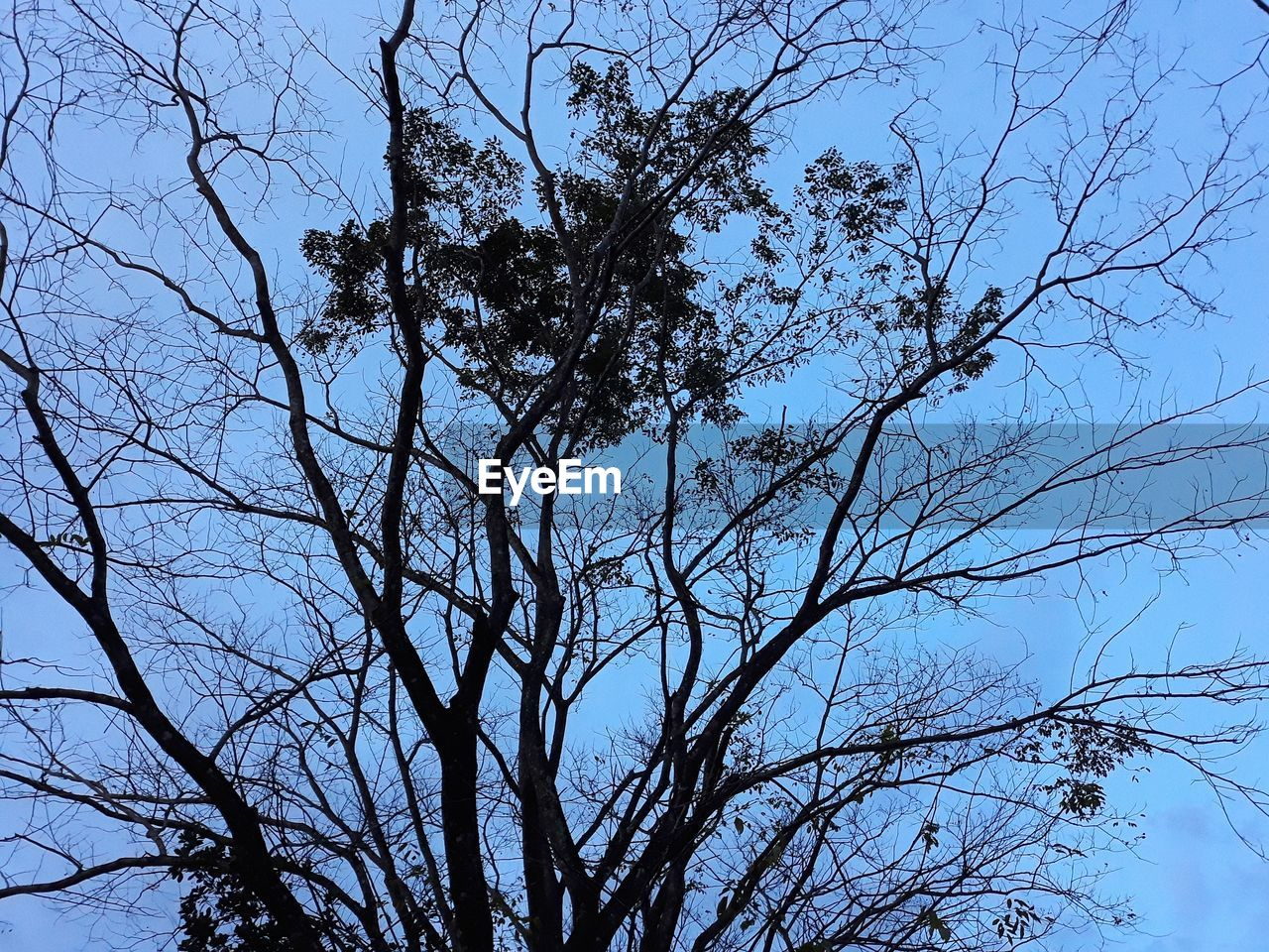 branch, tree, low angle view, nature, bare tree, beauty in nature, no people, outdoors, day, sky, growth, tranquility, clear sky, scenics