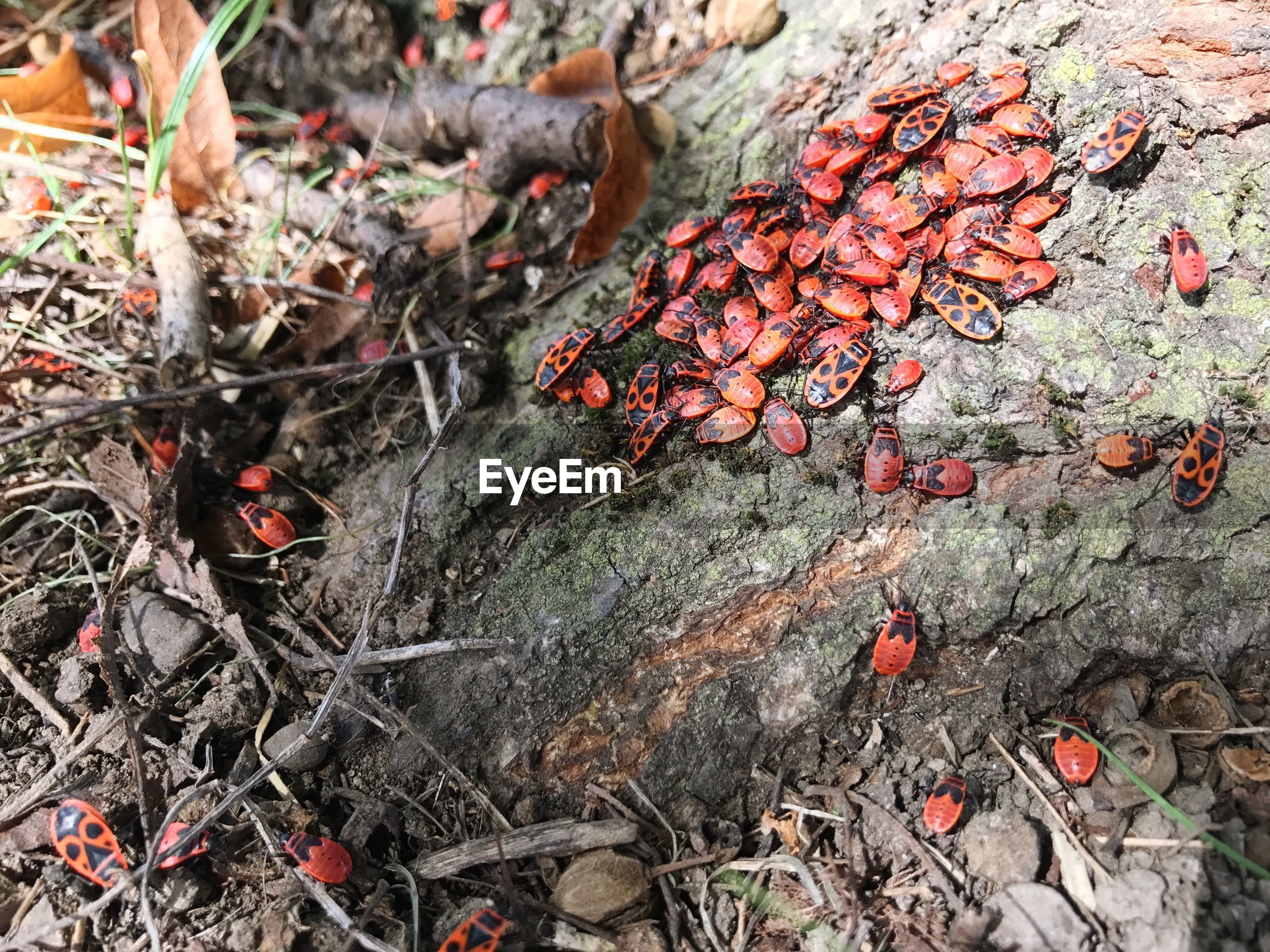 Close-up of bugs on tree root