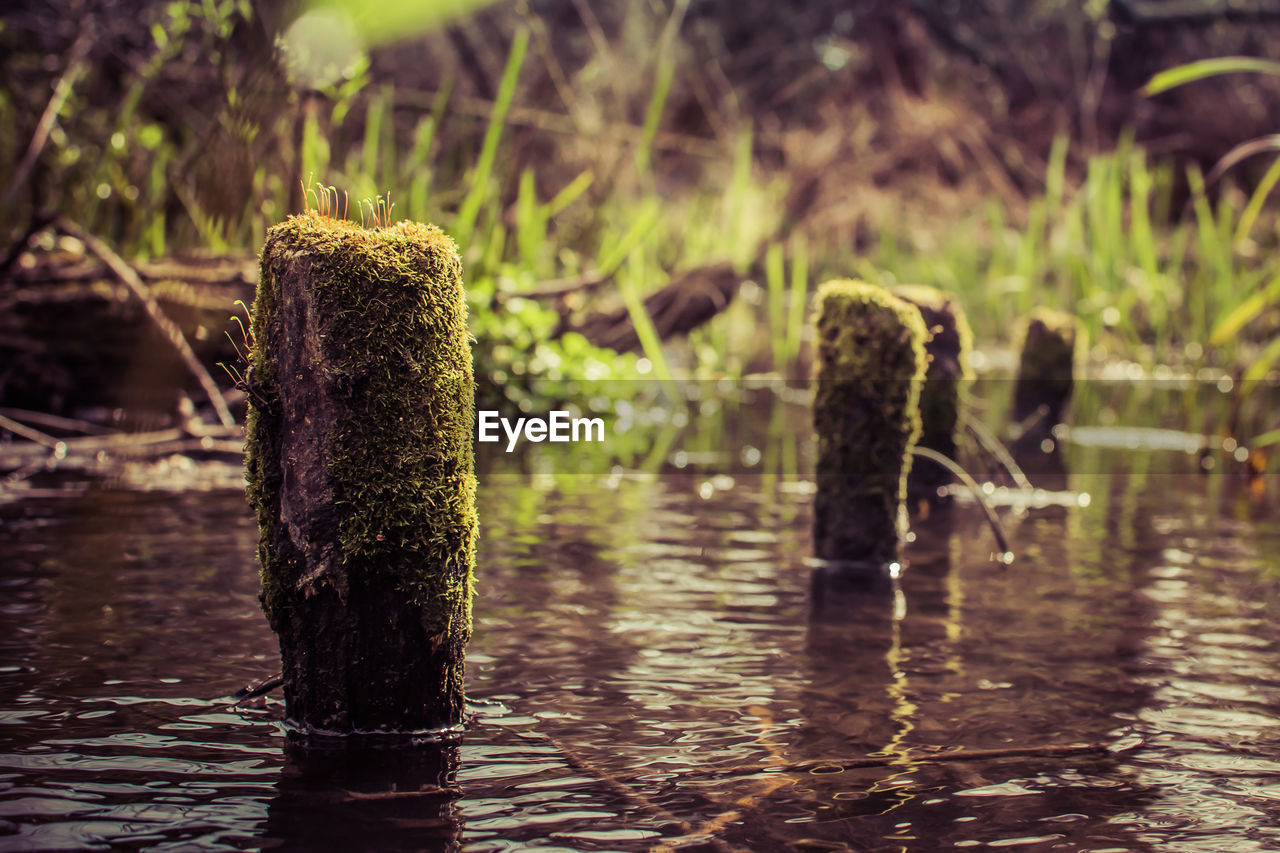 water, focus on foreground, nature, no people, day, waterfront, lake, outdoors, tranquility, beauty in nature, wooden post, close-up