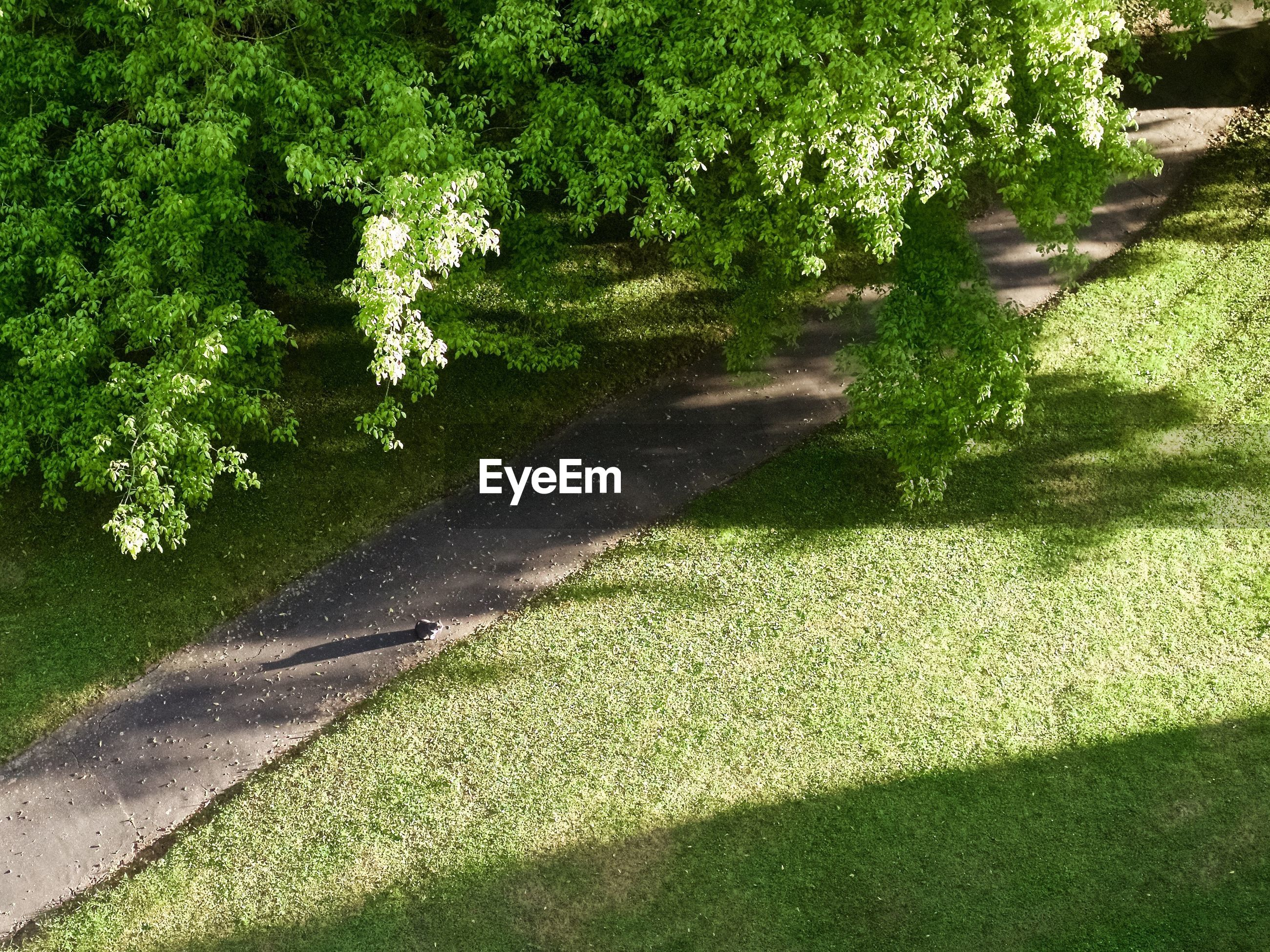 High angle view of trees and lawn in park