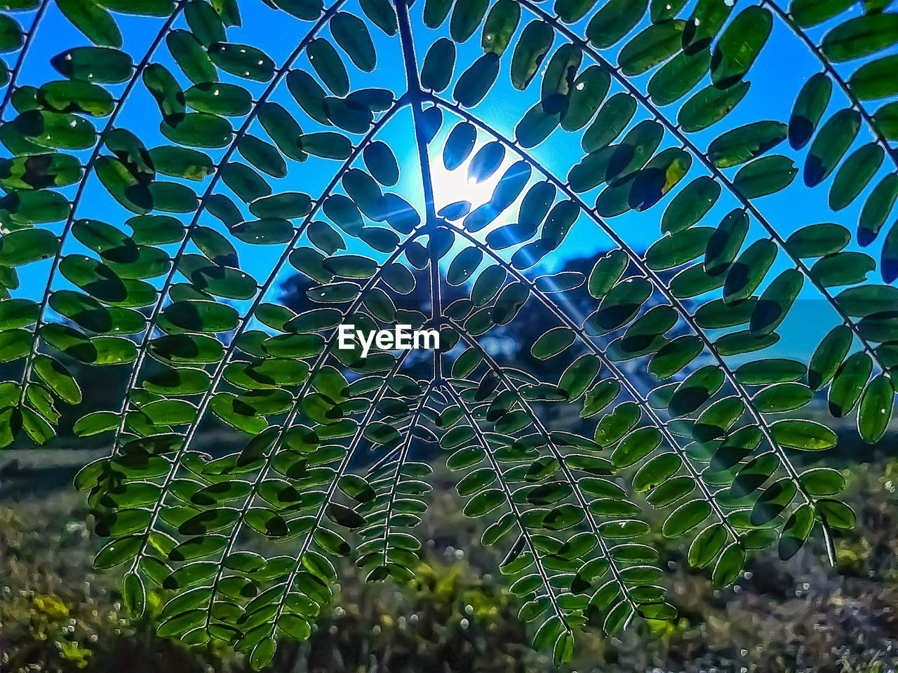 growth, plant, no people, day, beauty in nature, nature, leaf, green color, plant part, close-up, tree, sunlight, outdoors, pattern, natural pattern, tranquility, low angle view, sky, fragility, spider web