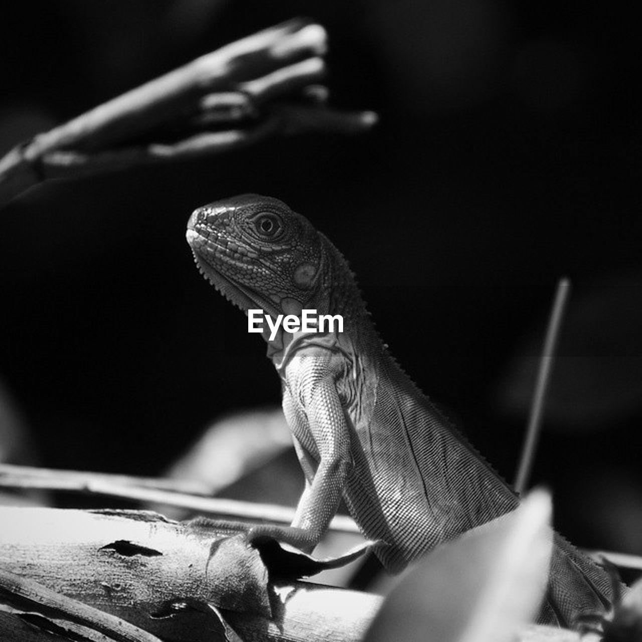 animal themes, animal, vertebrate, animal wildlife, reptile, one animal, animals in the wild, close-up, lizard, no people, animal body part, animal head, selective focus, nature, indoors, focus on foreground, looking, looking away, turtle, zoology, iguana, animal scale