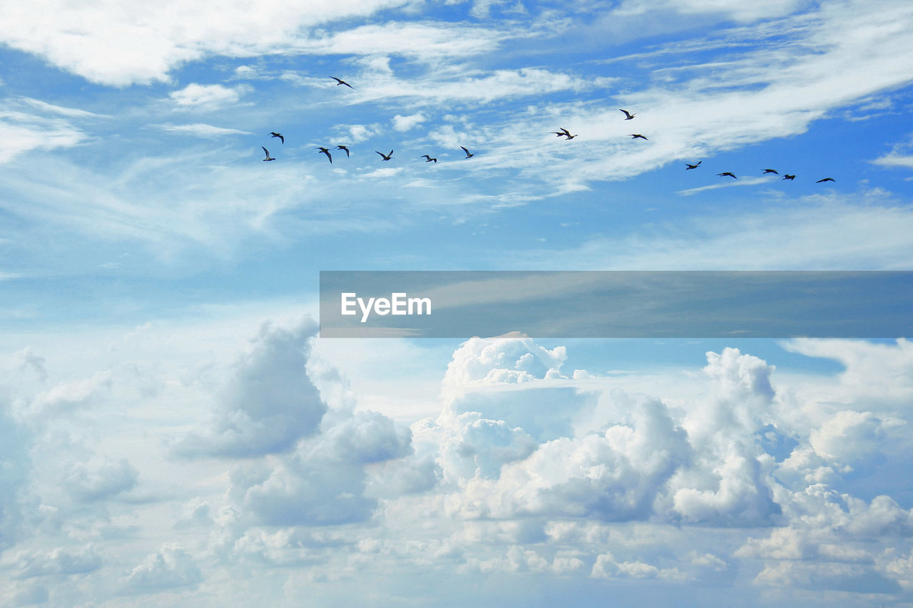 cloud - sky, sky, flying, animal, animal themes, vertebrate, animal wildlife, animals in the wild, low angle view, group of animals, beauty in nature, bird, large group of animals, nature, day, no people, mid-air, scenics - nature, tranquil scene, tranquility, flock of birds
