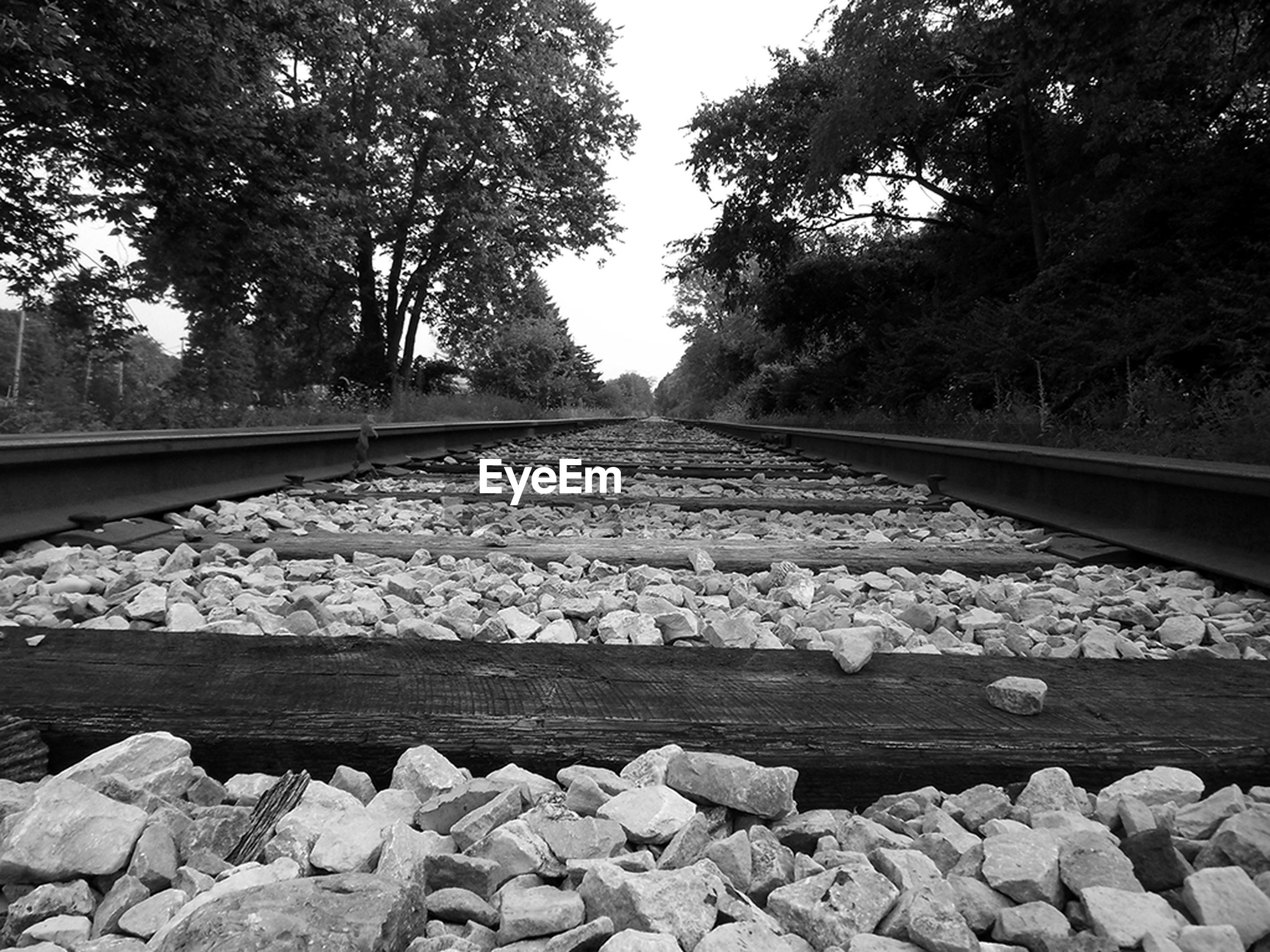 transportation, tree, railroad track, the way forward, diminishing perspective, vanishing point, rail transportation, stone - object, mode of transport, rock - object, connection, nature, day, forest, travel, surface level, outdoors, tranquility, no people, cropped