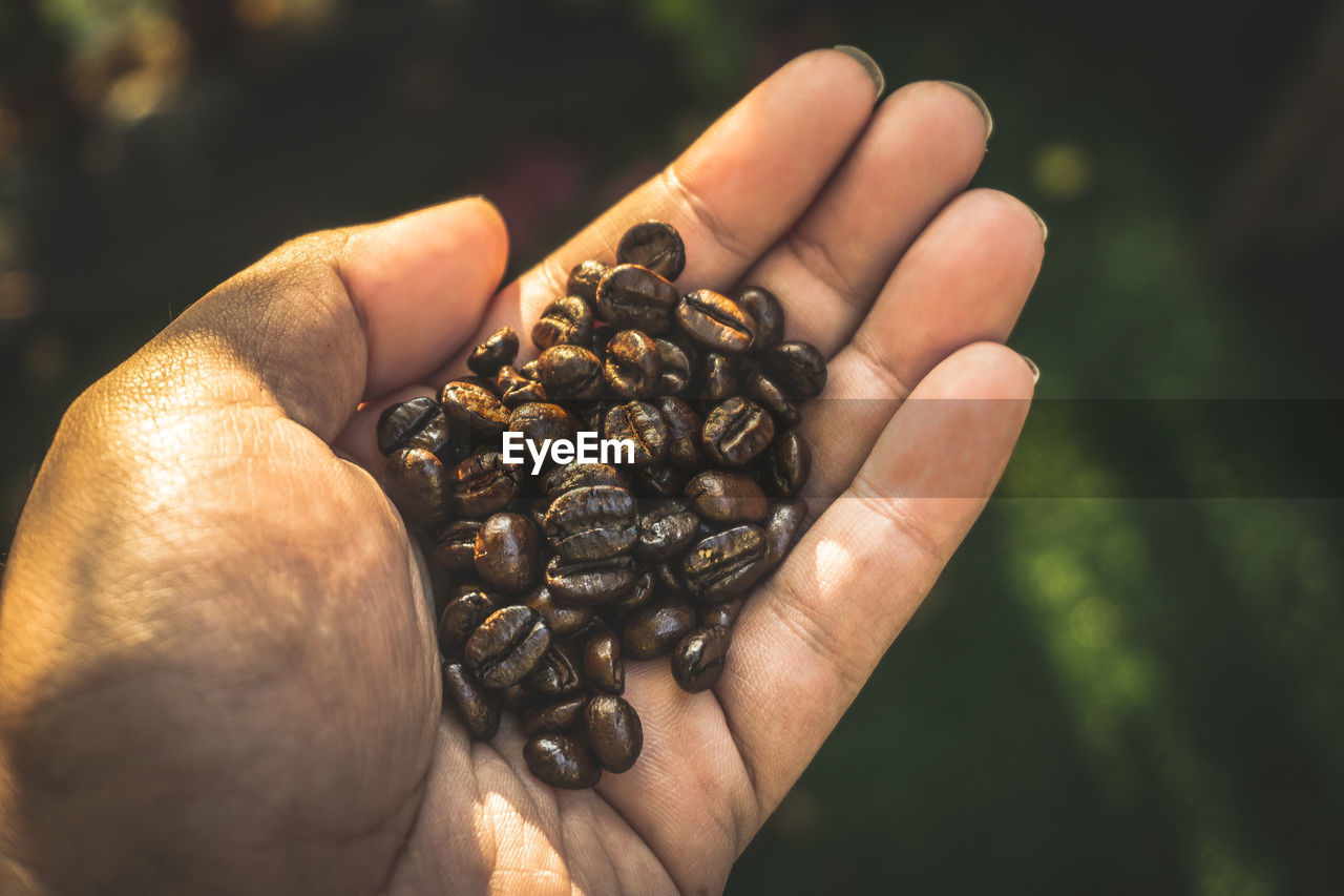 human hand, hand, human body part, holding, food and drink, one person, real people, food, freshness, close-up, roasted coffee bean, body part, focus on foreground, coffee - drink, day, finger, raw coffee bean, unrecognizable person, human finger, coffee bean, hands cupped, human limb, caffeine