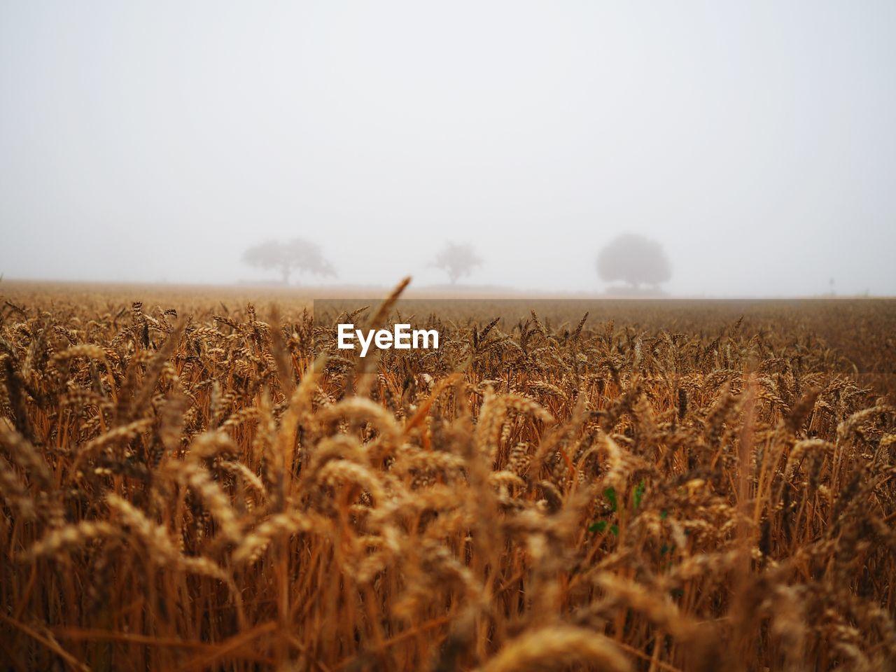 Crops Growing In Field Against Sky
