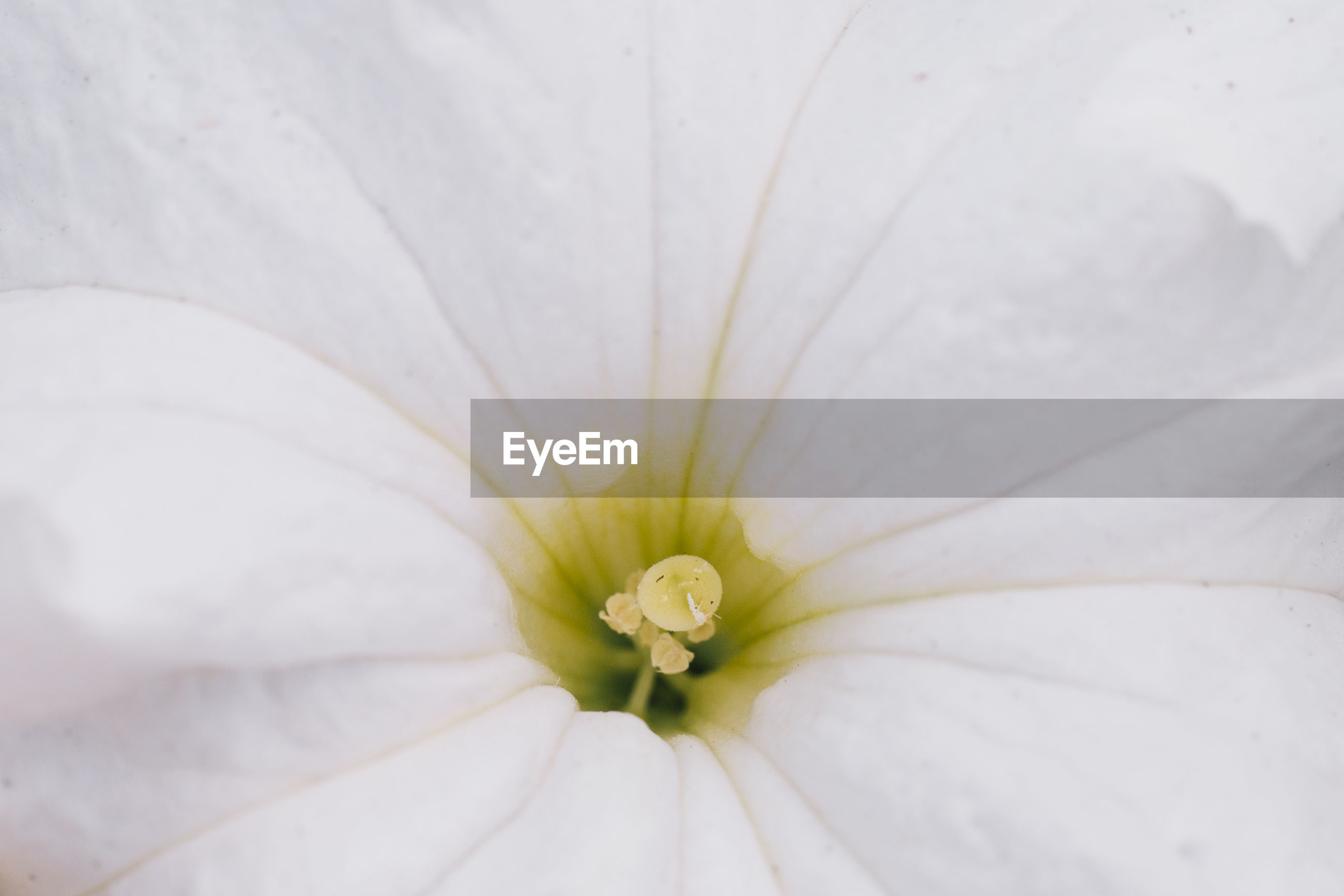 Full frame shot of white flower
