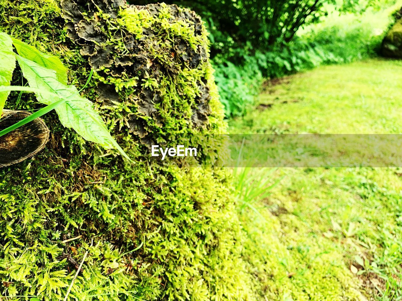 green color, plant, growth, nature, no people, day, moss, plant part, beauty in nature, leaf, outdoors, grass, close-up, tranquility, land, tree, focus on foreground, field, selective focus, rock, lichen