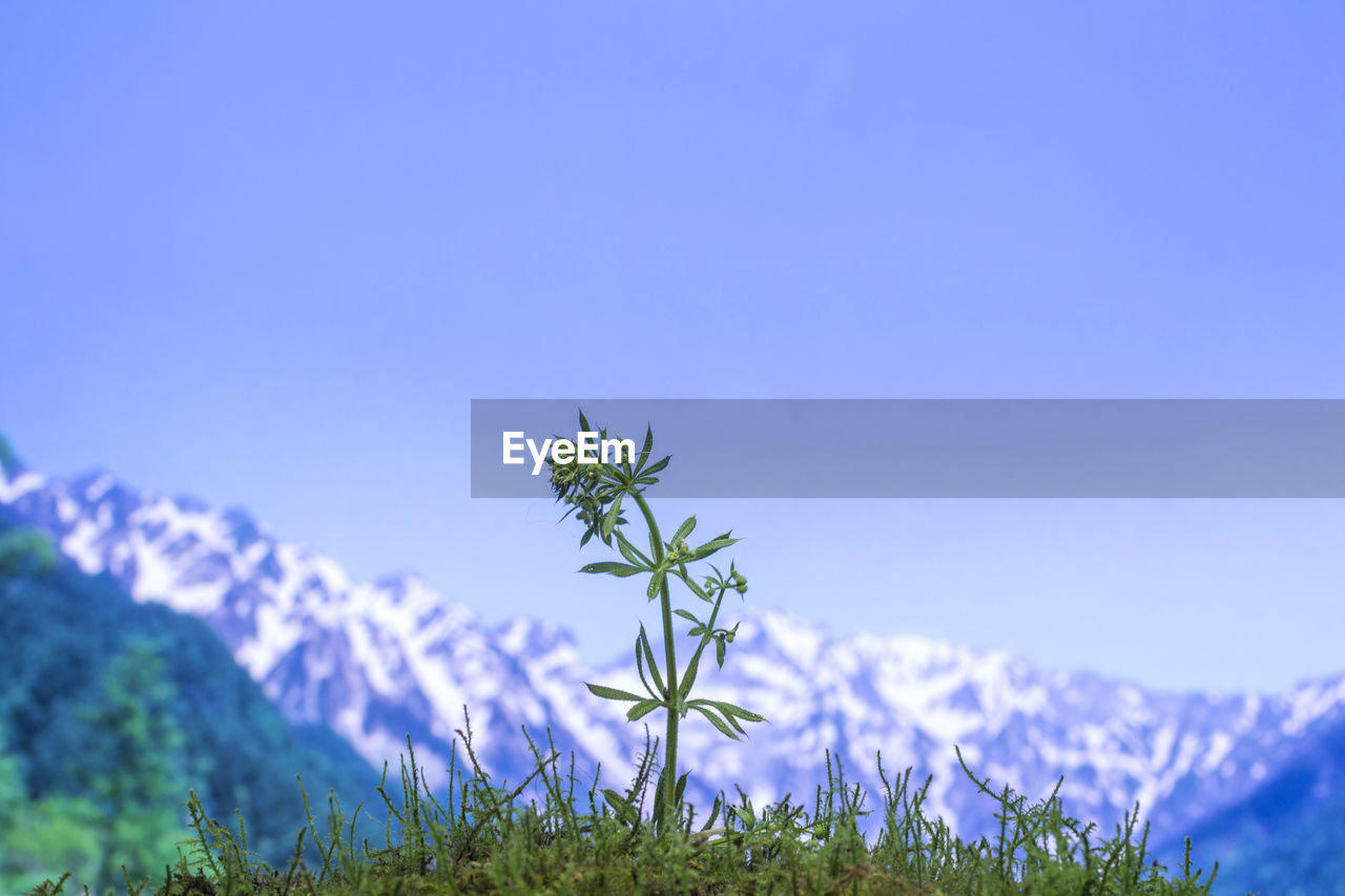 plant, growth, beauty in nature, sky, flower, freshness, nature, copy space, no people, flowering plant, blue, fragility, day, vulnerability, field, tranquility, land, clear sky, selective focus, green color, outdoors, purple