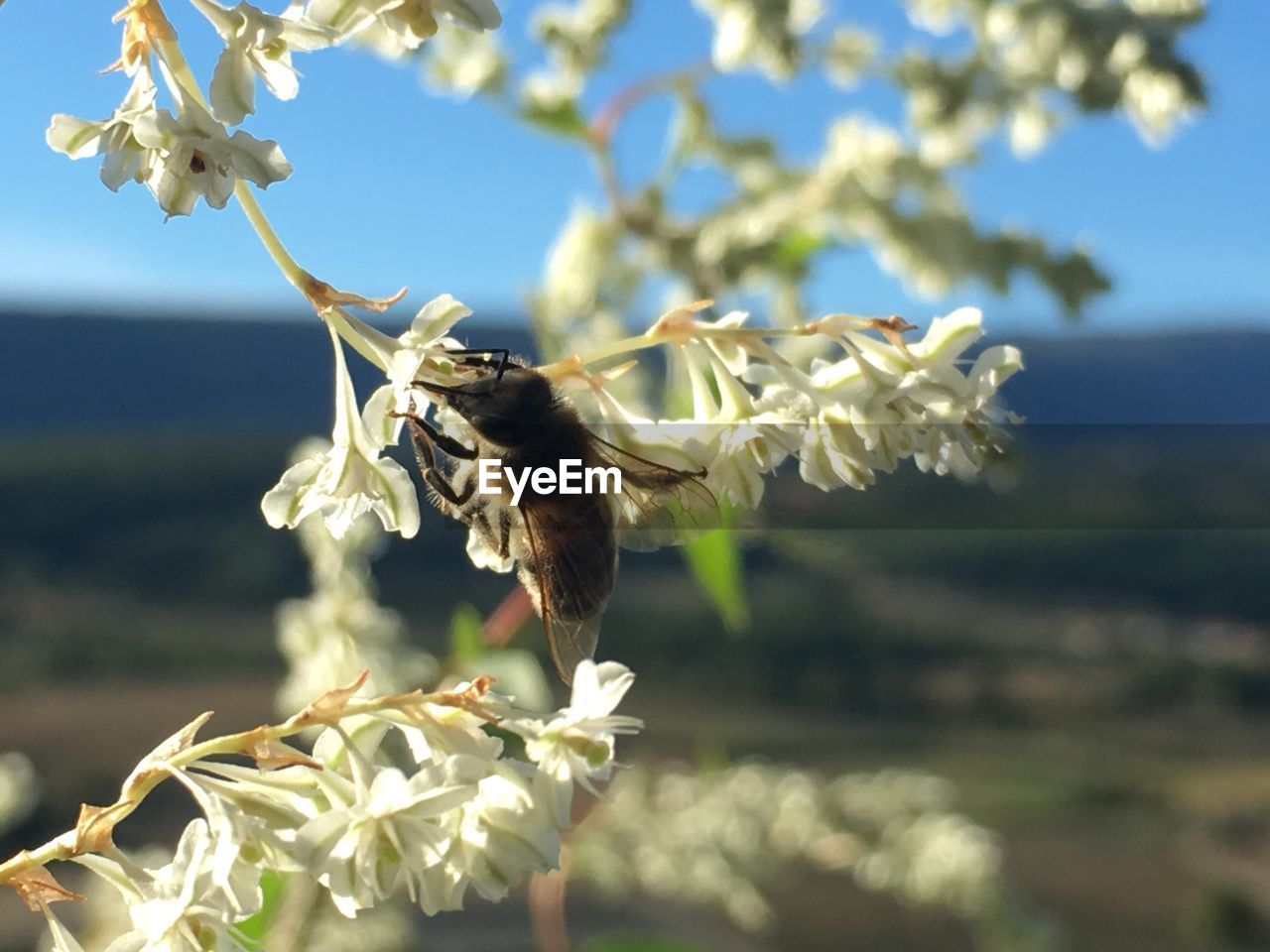 flower, flowering plant, plant, fragility, animal themes, vulnerability, animal, one animal, freshness, growth, nature, animals in the wild, beauty in nature, focus on foreground, animal wildlife, petal, close-up, no people, day, bee, flower head, outdoors, pollination