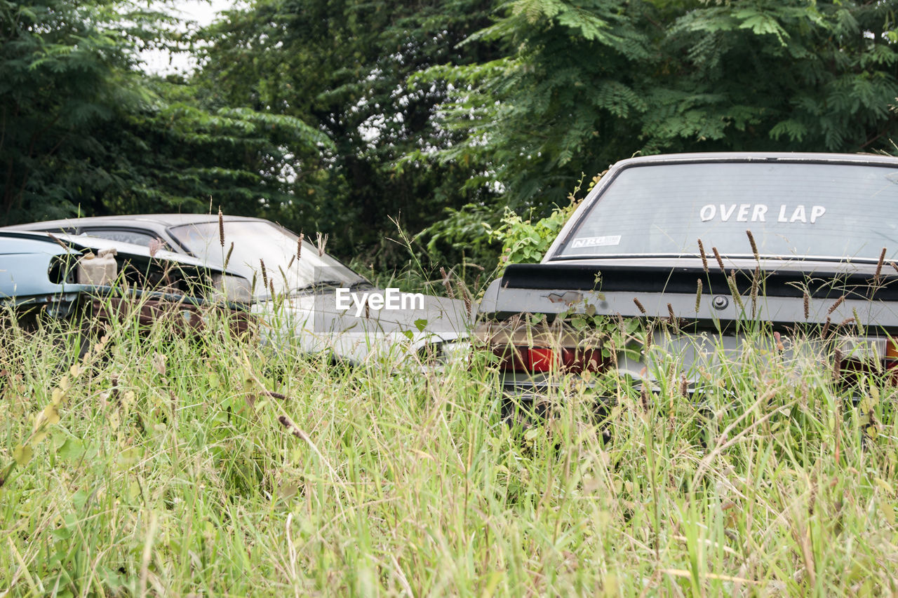 day, car, field, tree, transportation, growth, grass, land vehicle, plant, outdoors, no people, nature