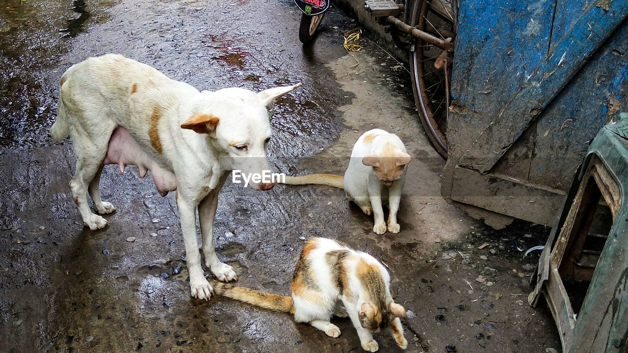 HIGH ANGLE VIEW OF TWO DOGS ON STREET
