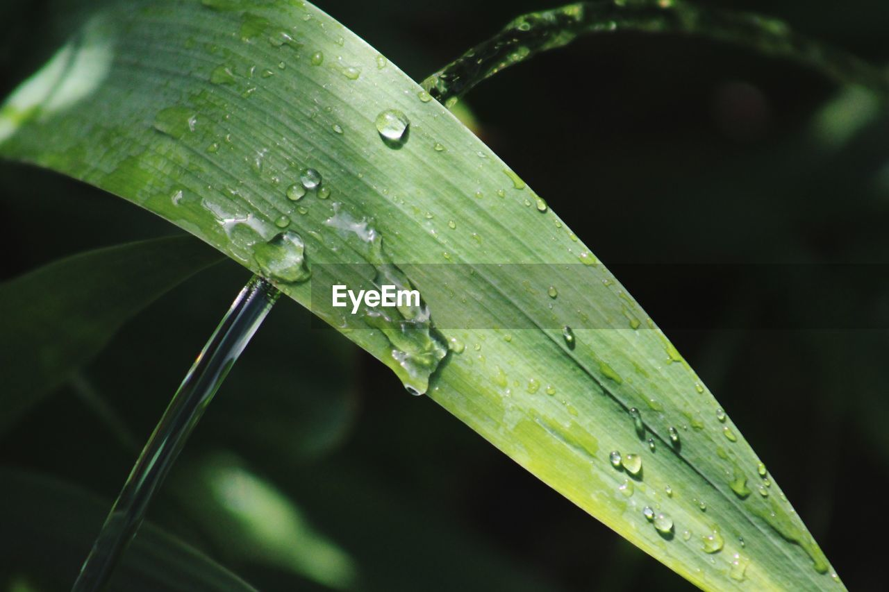 drop, green color, water, leaf, close-up, wet, nature, raindrop, focus on foreground, growth, day, outdoors, plant, fragility, no people, beauty in nature, purity, freshness