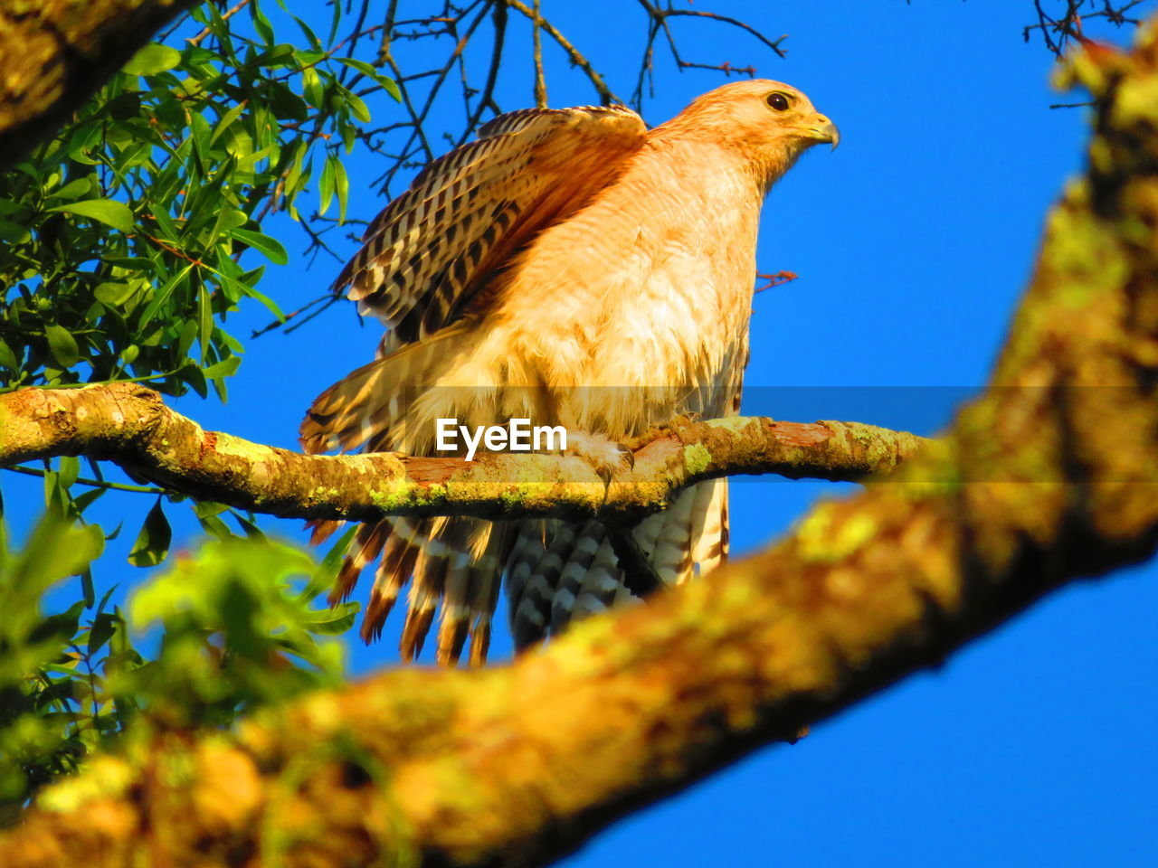 bird, animal, animal themes, branch, tree, vertebrate, animals in the wild, animal wildlife, one animal, low angle view, perching, plant, nature, sky, no people, day, blue, sunlight, selective focus, clear sky, outdoors