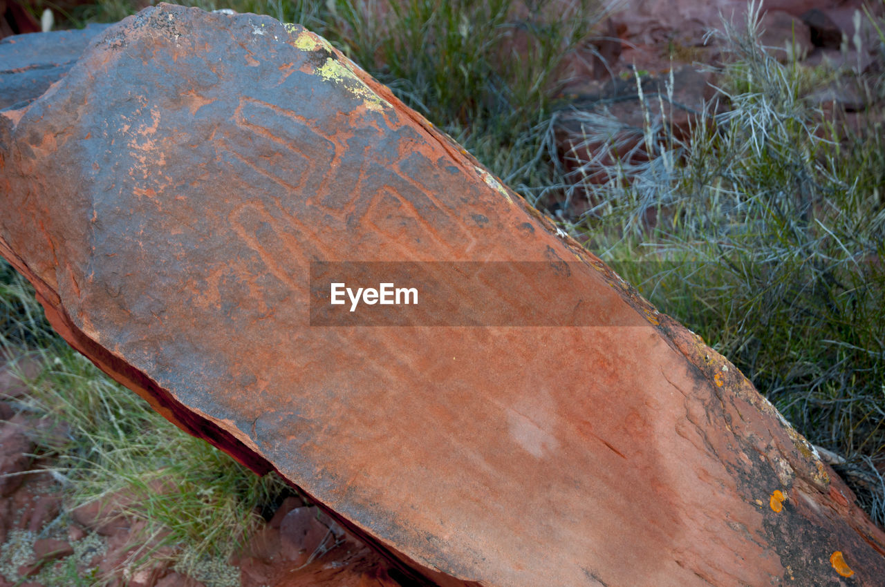 day, plant, grass, high angle view, close-up, nature, no people, outdoors, land, rusty, field, focus on foreground, tree, wood - material, forest, metal, deforestation, log, brown, environmental issues