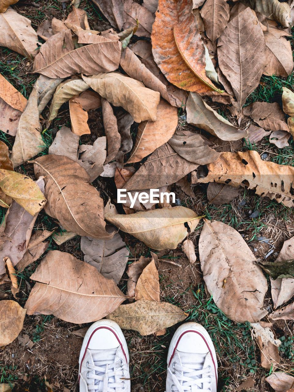 low section, plant part, leaf, autumn, dry, human leg, shoe, personal perspective, leaves, land, body part, field, high angle view, nature, real people, day, human body part, change, one person, unrecognizable person, outdoors, human foot, messy, human limb, dried, finger