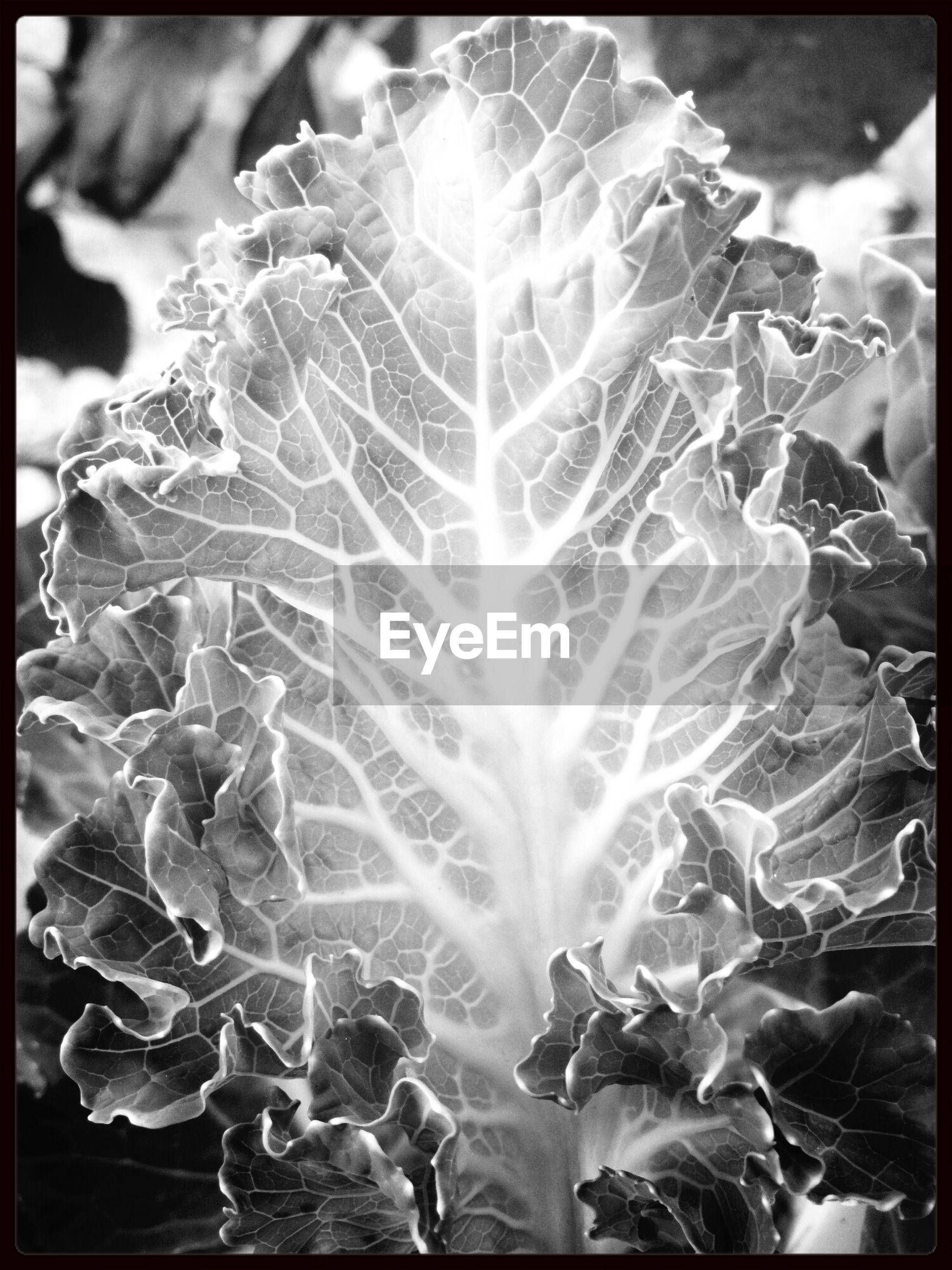 Close-up of leaf vein