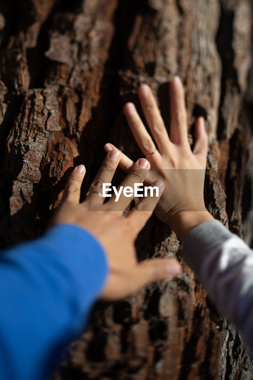 Cropped Hands Of Women Touching Tree Trunk
