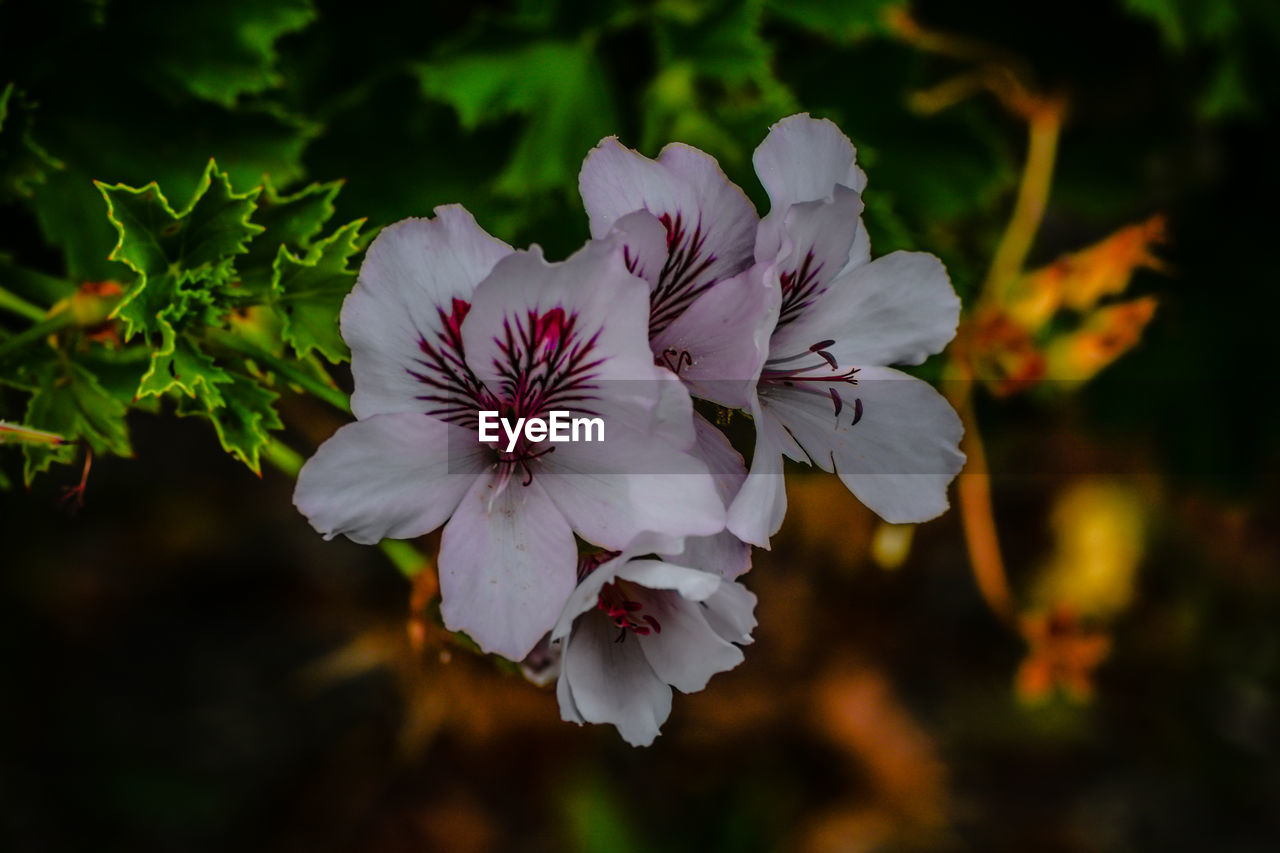 flower, flowering plant, fragility, vulnerability, freshness, petal, plant, beauty in nature, growth, flower head, inflorescence, close-up, focus on foreground, pollen, nature, white color, no people, day, selective focus, outdoors