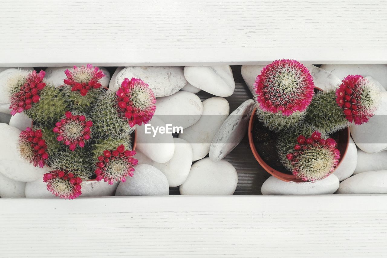 DIRECTLY ABOVE SHOT OF POTTED CACTUS PLANTS
