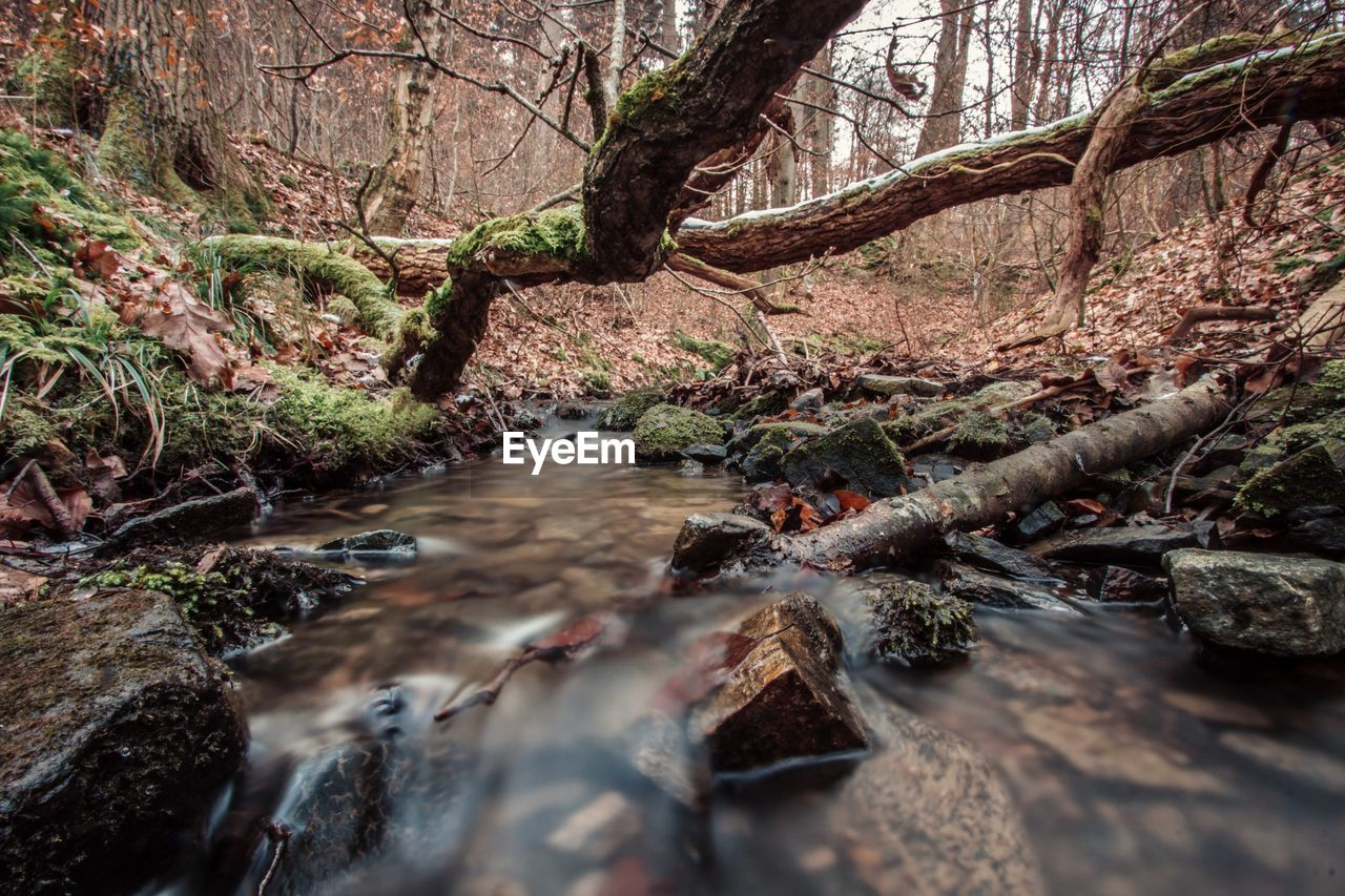 Stream and fallen trees in forest