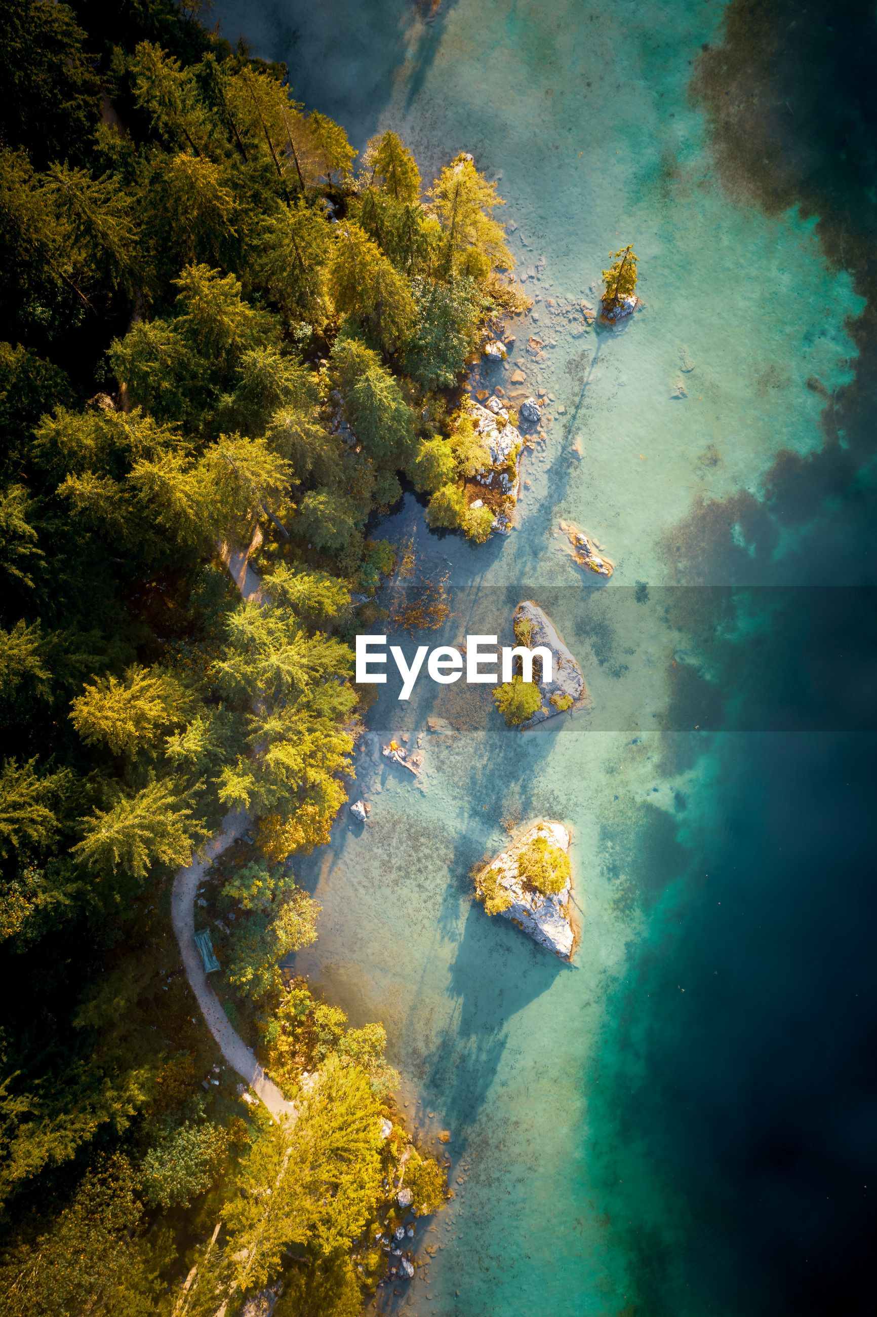 Aerial view of trees in forest by sea