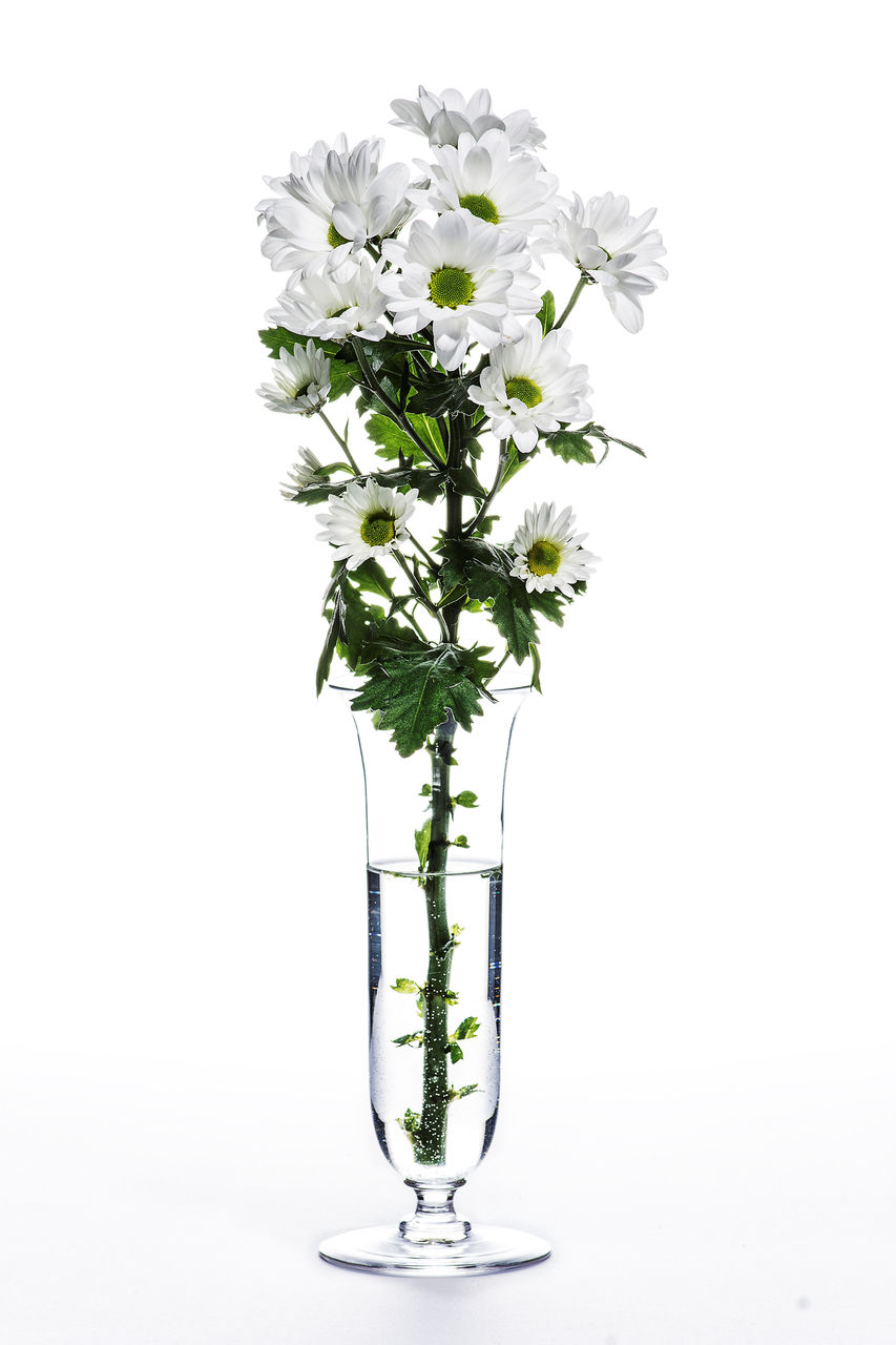 flowering plant, flower, studio shot, white background, plant, vase, indoors, nature, freshness, beauty in nature, fragility, vulnerability, no people, flower head, close-up, copy space, glass - material, white color, petal, cut out, flower arrangement, glass, purity