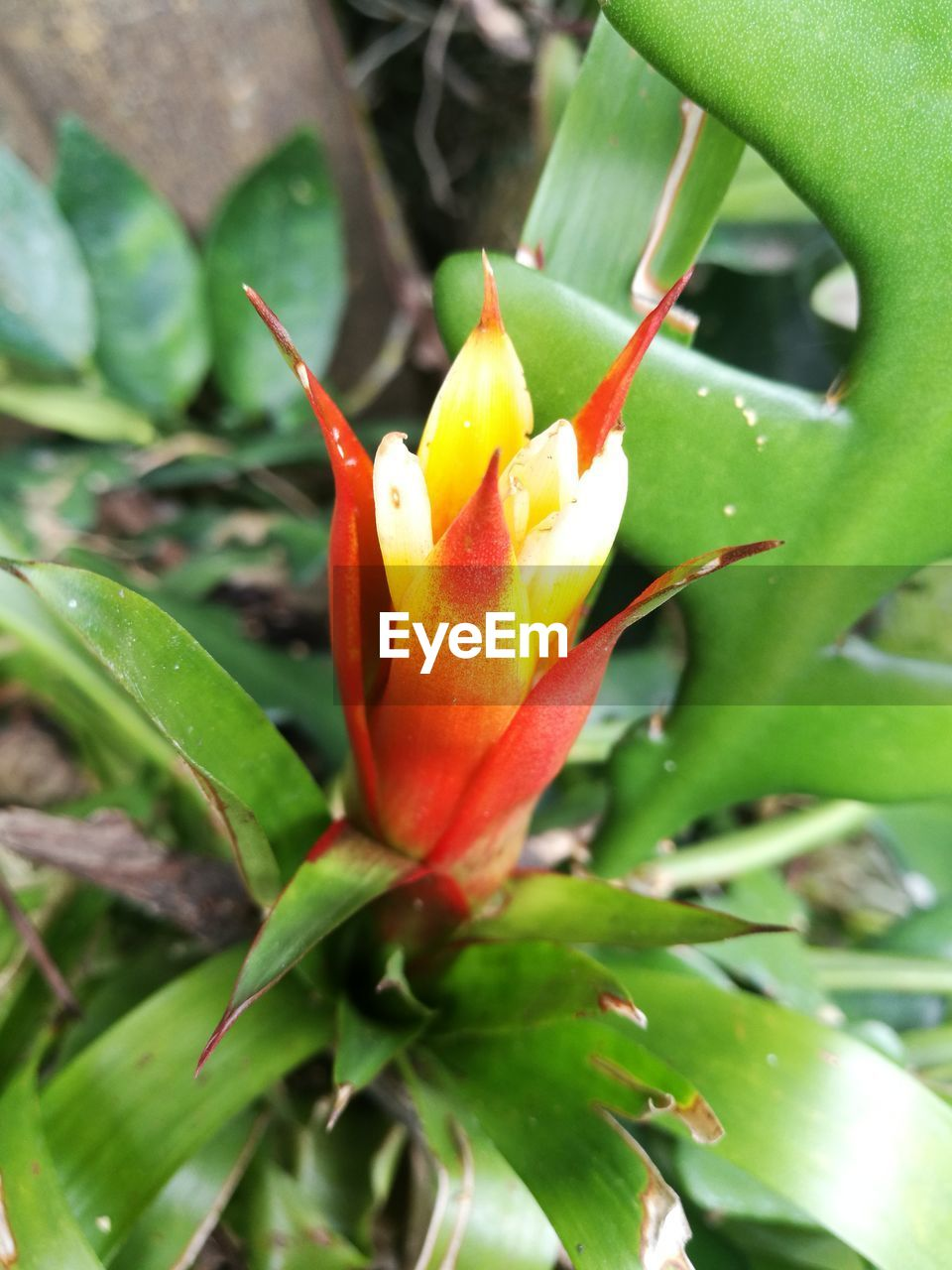 growth, nature, flower, beauty in nature, petal, freshness, green color, red, fragility, day, close-up, outdoors, plant, leaf, flower head, no people