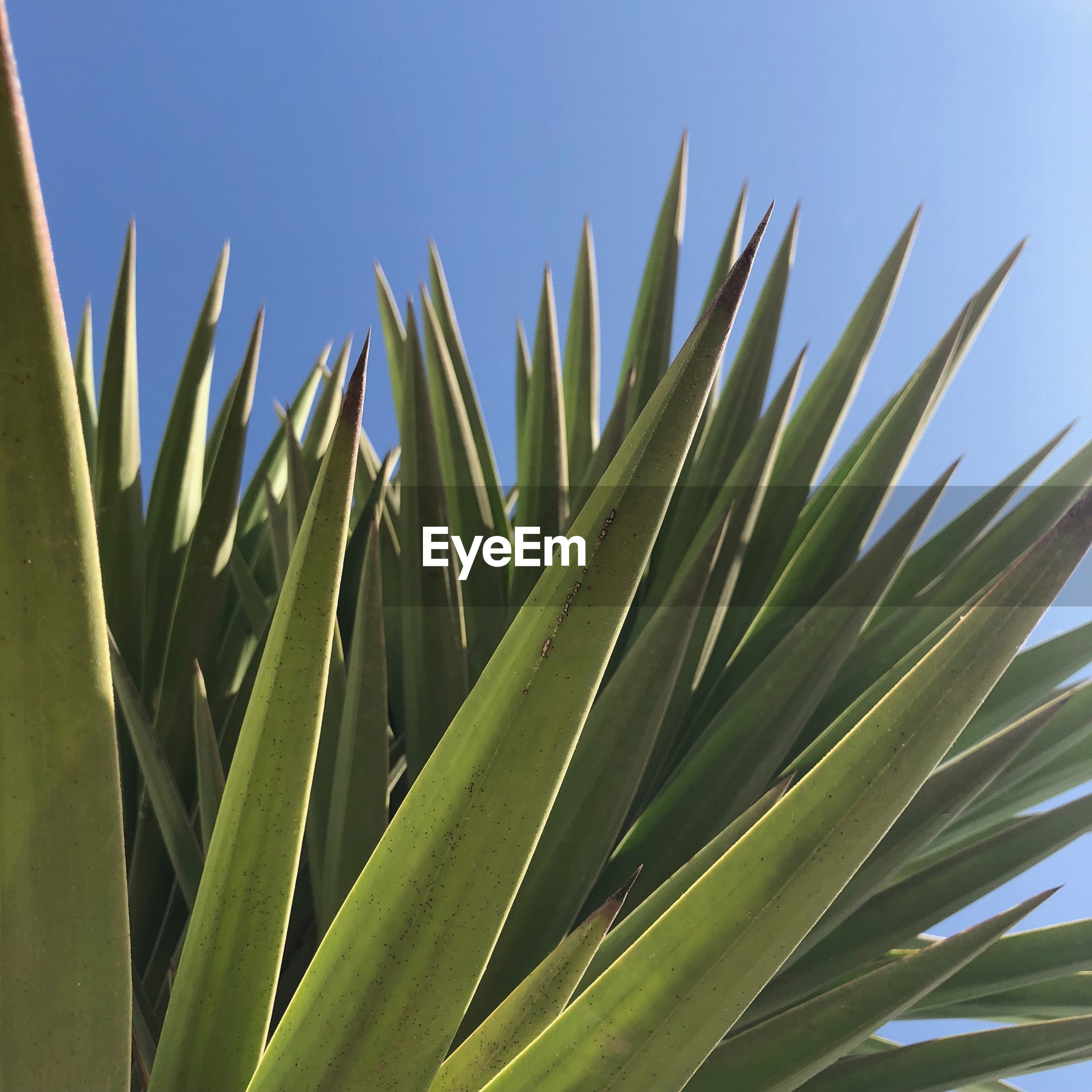 CLOSE-UP OF SUCCULENT PLANTS AGAINST SKY