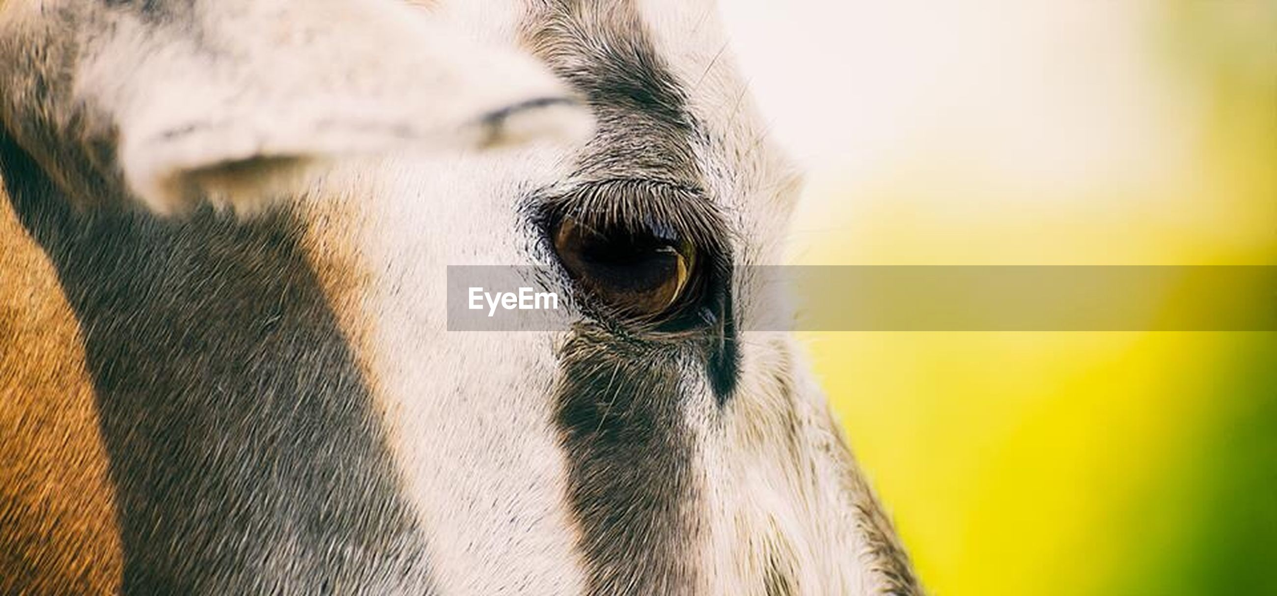 EXTREME CLOSE UP OF HORSE