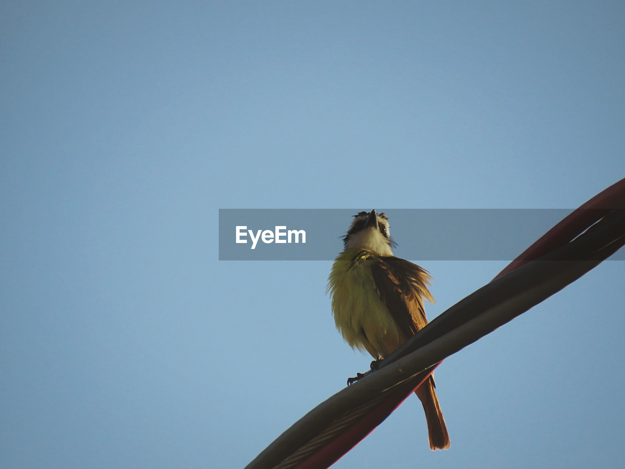 LOW ANGLE VIEW OF BIRD PERCHING ON BLUE AGAINST SKY