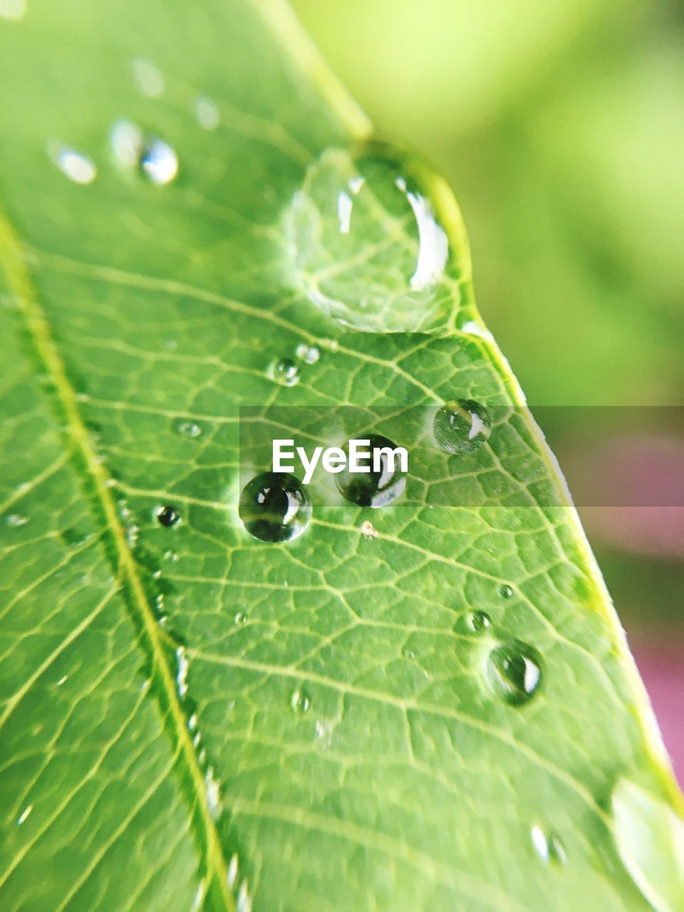 leaf, green color, nature, drop, close-up, beauty in nature, growth, fragility, plant, one animal, day, freshness, no people, focus on foreground, water, outdoors, animal themes, raindrop