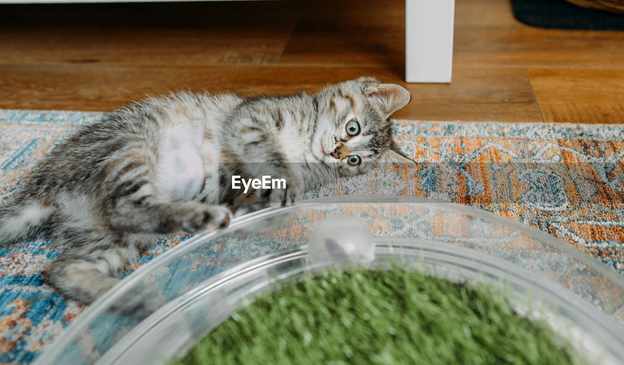 CLOSE-UP OF A CAT WITH EYES