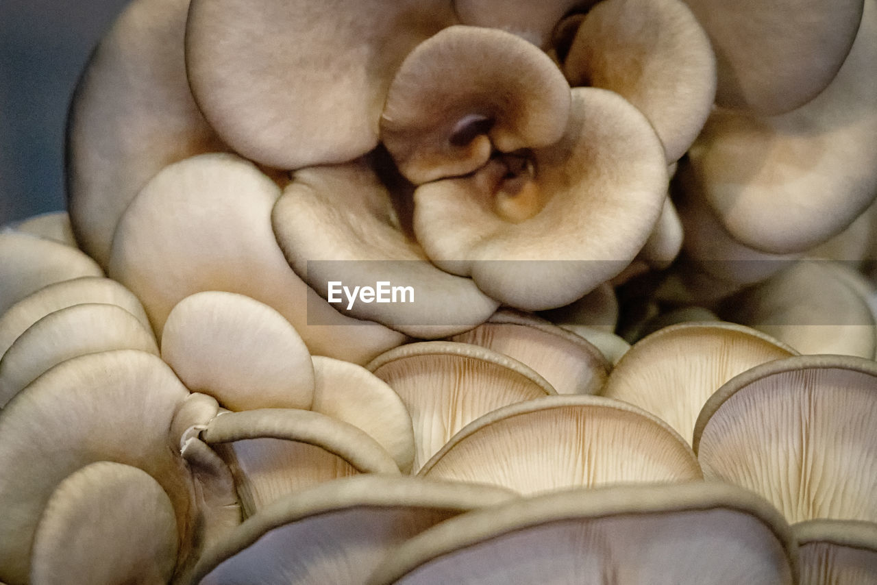 close-up, food, no people, freshness, food and drink, indoors, wellbeing, healthy eating, still life, large group of objects, high angle view, full frame, directly above, day, white color, vulnerability, focus on foreground, fragility, mushroom, fruit, softness