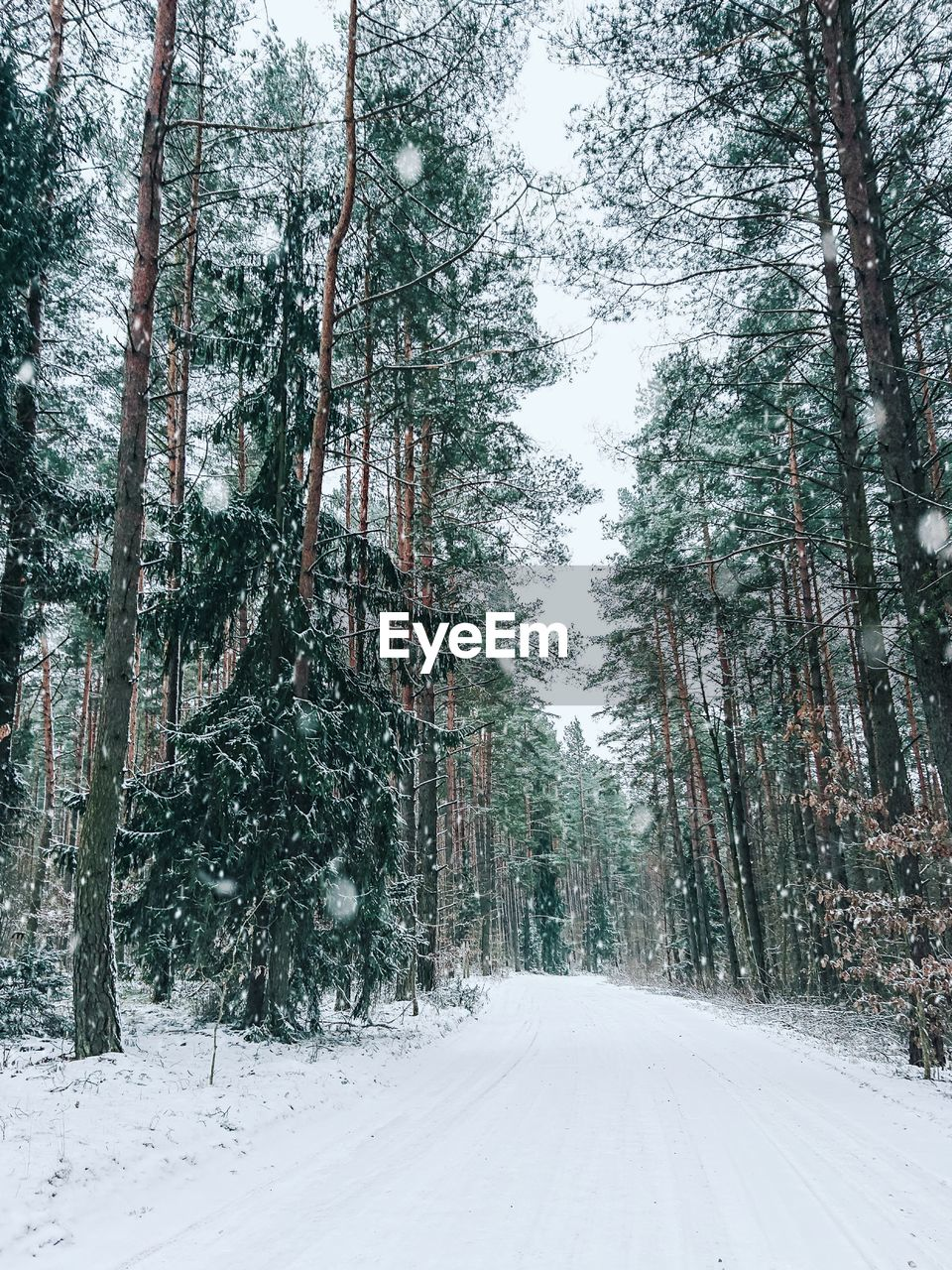 tree, cold temperature, snow, plant, winter, forest, land, tree trunk, trunk, the way forward, beauty in nature, tranquility, road, tranquil scene, scenics - nature, direction, nature, growth, no people, diminishing perspective, woodland, outdoors, snowing, coniferous tree, long