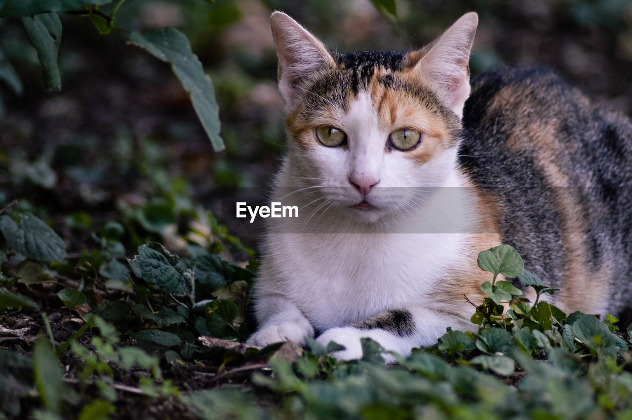 Close-up portrait of cat sitting on field