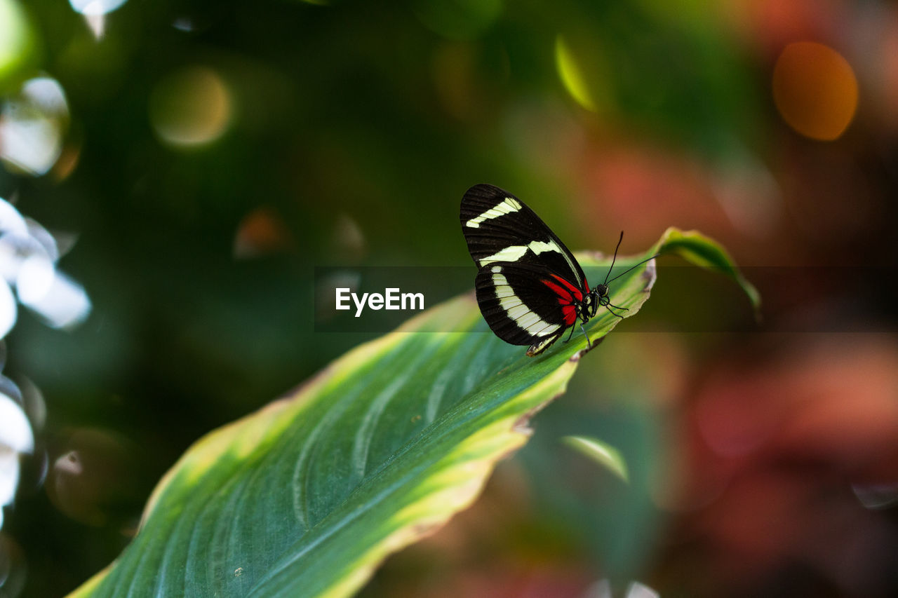 one animal, insect, animals in the wild, butterfly - insect, animal themes, leaf, nature, plant, green color, growth, focus on foreground, no people, butterfly, outdoors, animal wildlife, day, close-up, beauty in nature, fragility, freshness