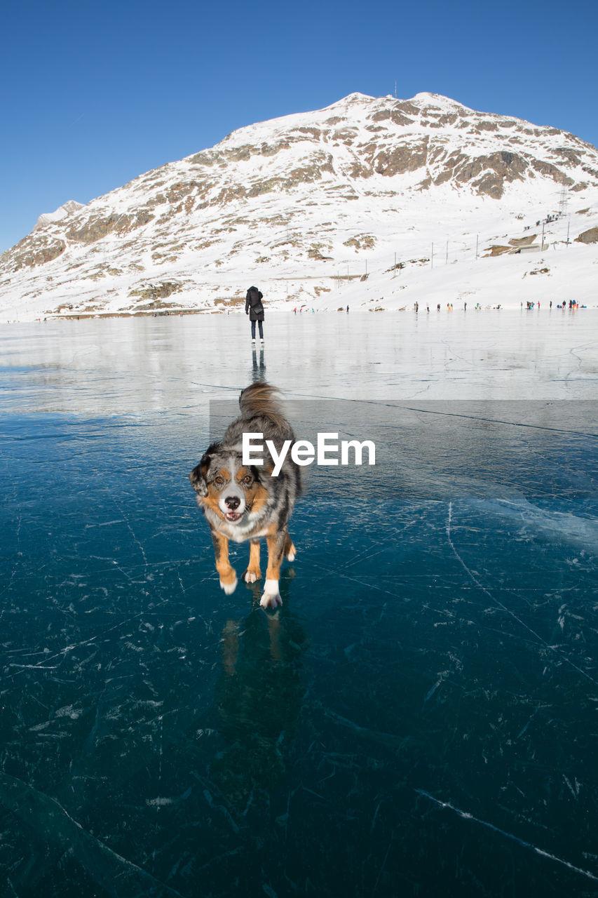 Dog Running On Frozen Lake