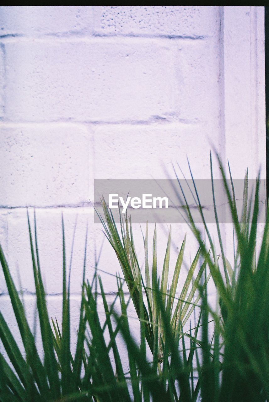 plant, growth, no people, nature, day, grass, close-up, wall - building feature, architecture, green color, built structure, outdoors, white color, beauty in nature, transfer print, auto post production filter, freshness, flower, green, building exterior