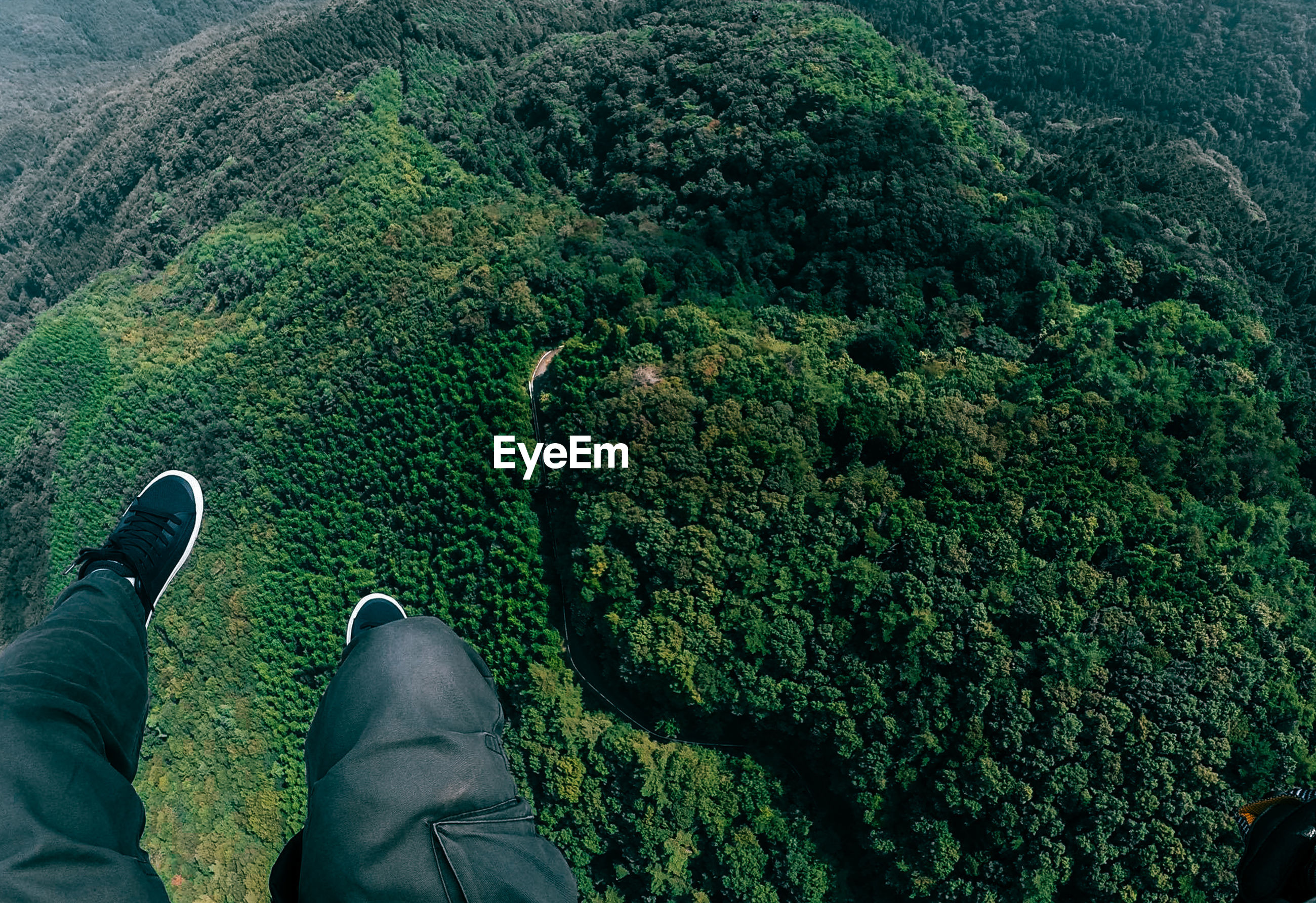High angle view of forest