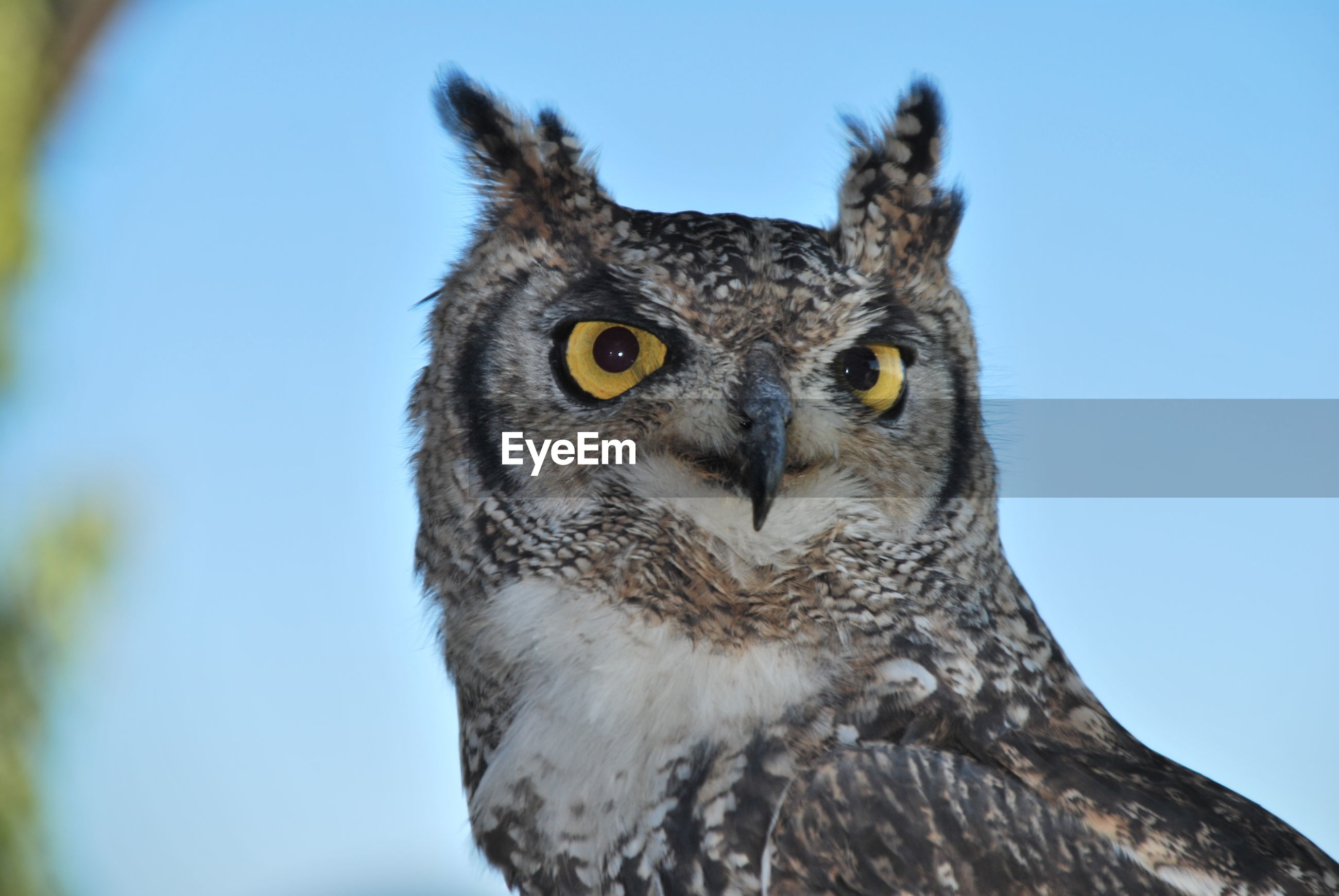 LOW ANGLE VIEW OF OWL PERCHING ON ROCK AGAINST SKY